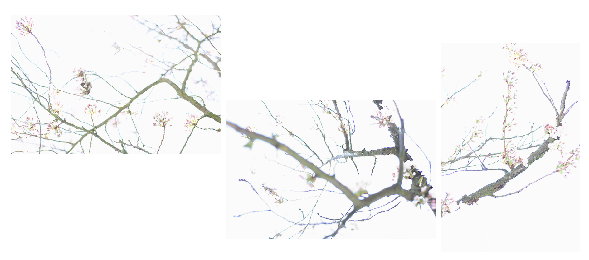 """describing a curve which brings it back to its point of departure   c-prints, aluminum, wood, plexiglass, 22"""" x 77"""""""