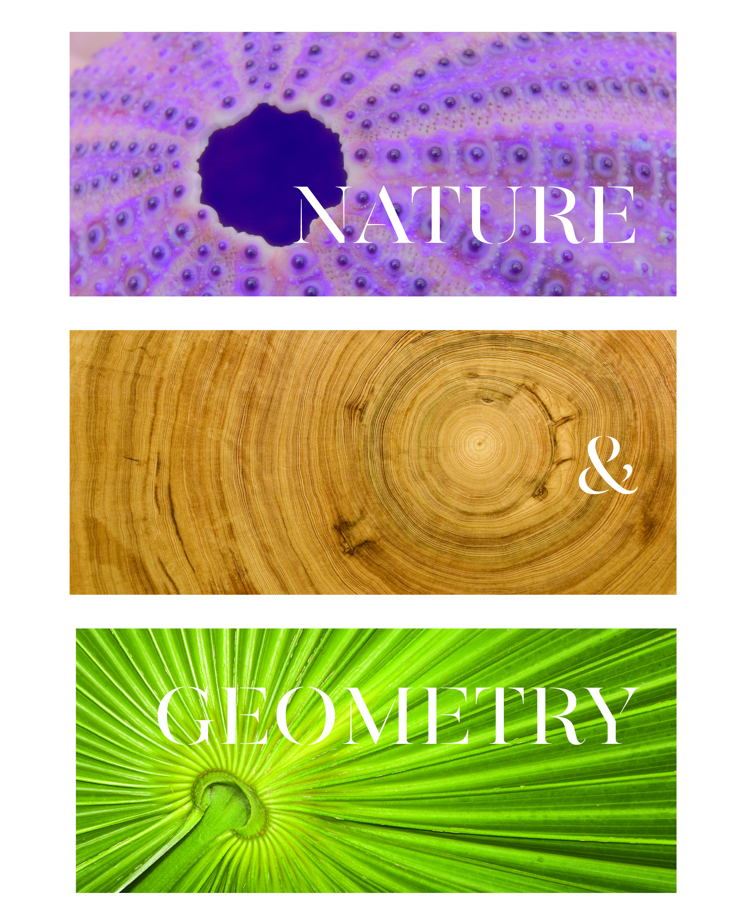 Nature & Geometry front cover.jpg
