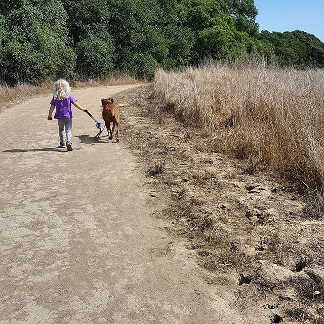 #hike  #toddler #dogsofinstagram #dogwalk #gooddog #pitbullsofinstagram #rescuedog #petaluma #sunshine #🐶