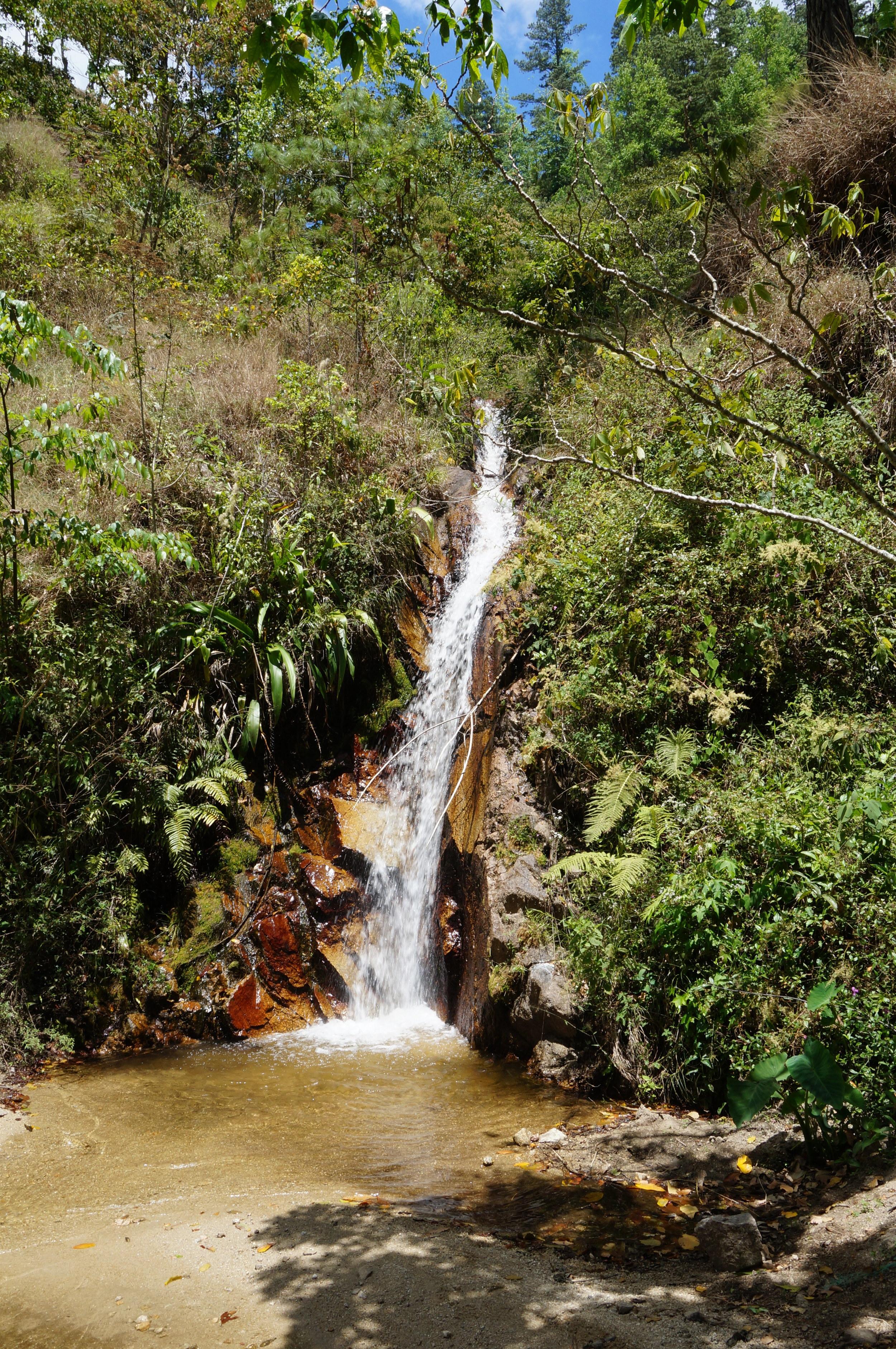 PACAMARA NATURAL (LIMITED BATCH)   COUNTRY / NICARAGUA   FARM / LOS CONGOS  VARIETY / PACAMARA  PRODUCER / JOSE RENE PAGUAGA  FLAVOR NOTES / LEMON, TANGERINE, MANGO, STAR FRUIT, STRAWBERRY, BLACKBERRY