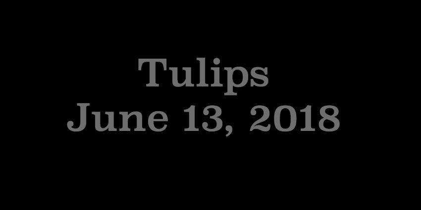 June 13 2018 - Tulips.jpg