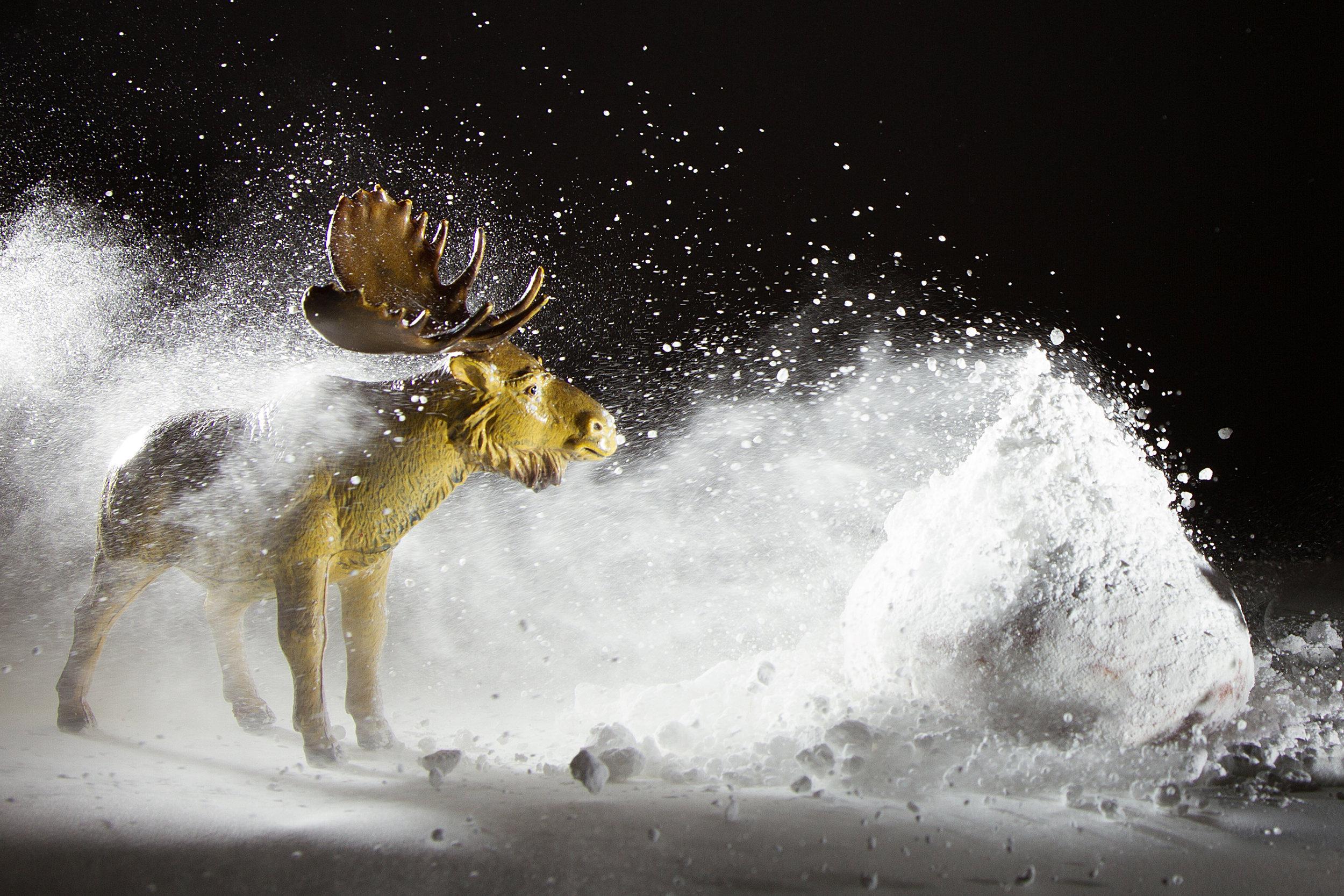 Moose_In_Snowstorm.jpg