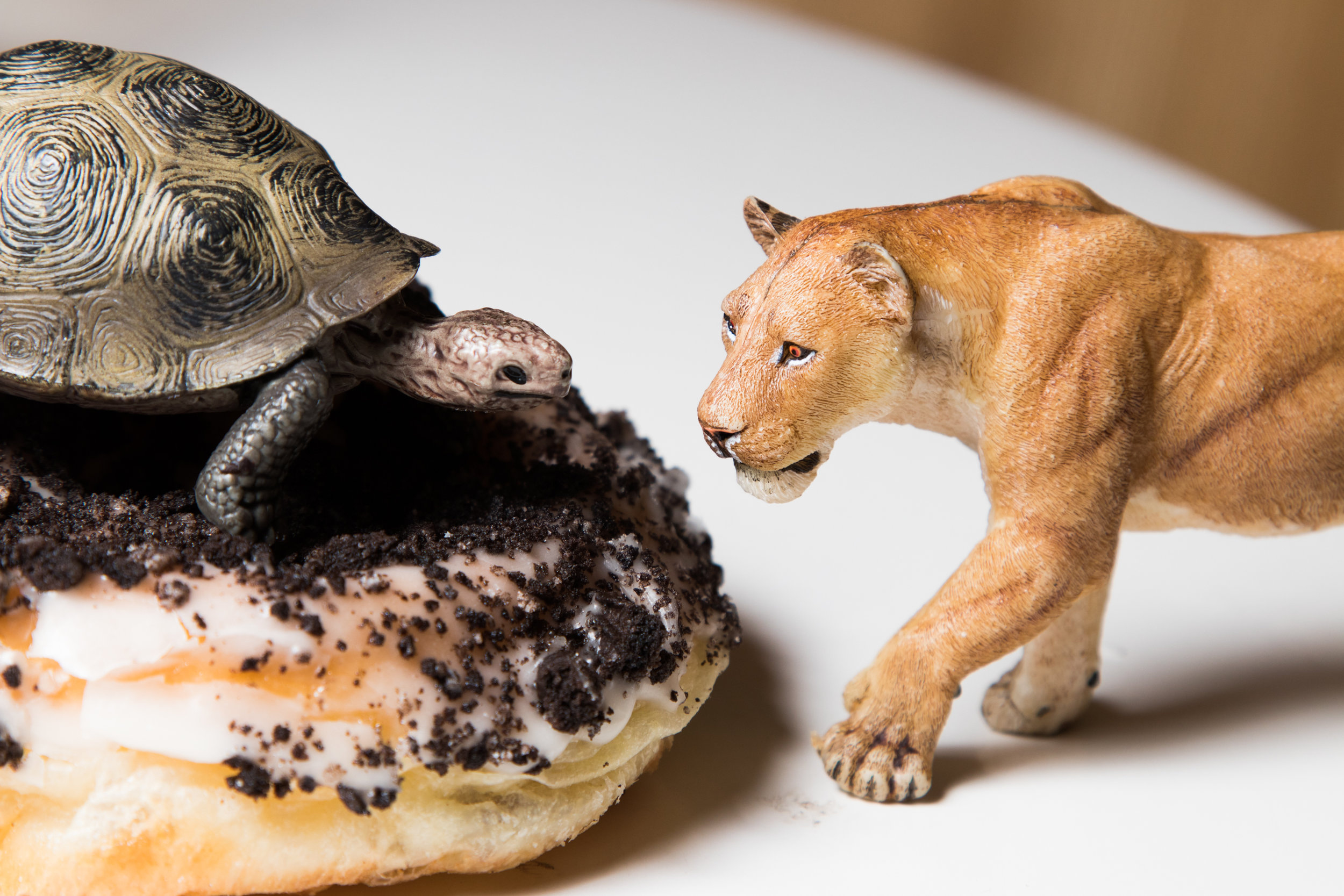 Tortoise and Lioness