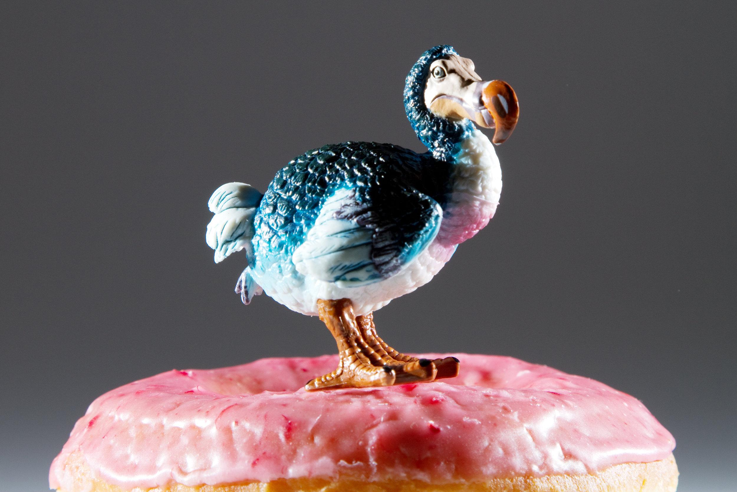 Dodo Donut