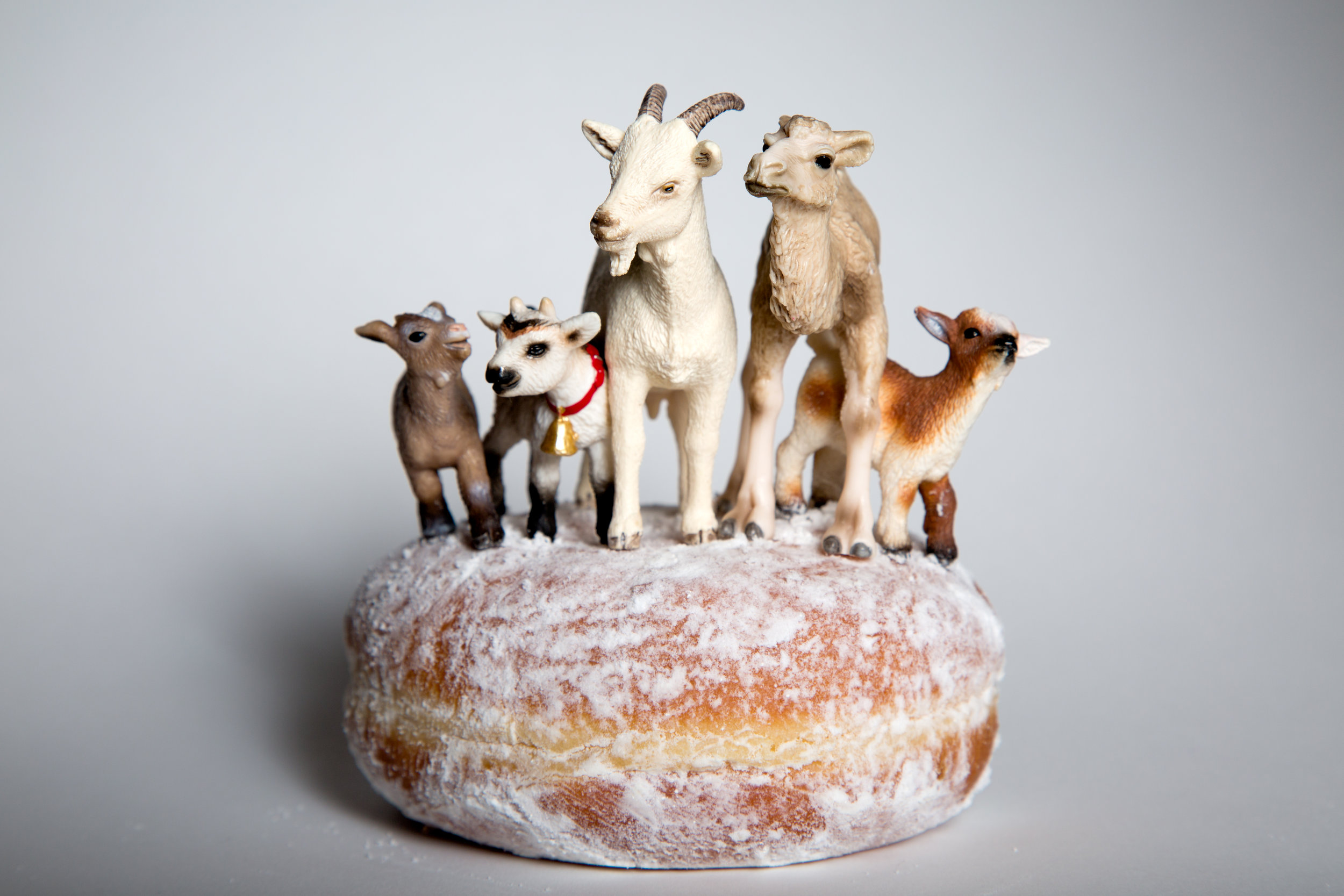5 Goats and a Donut