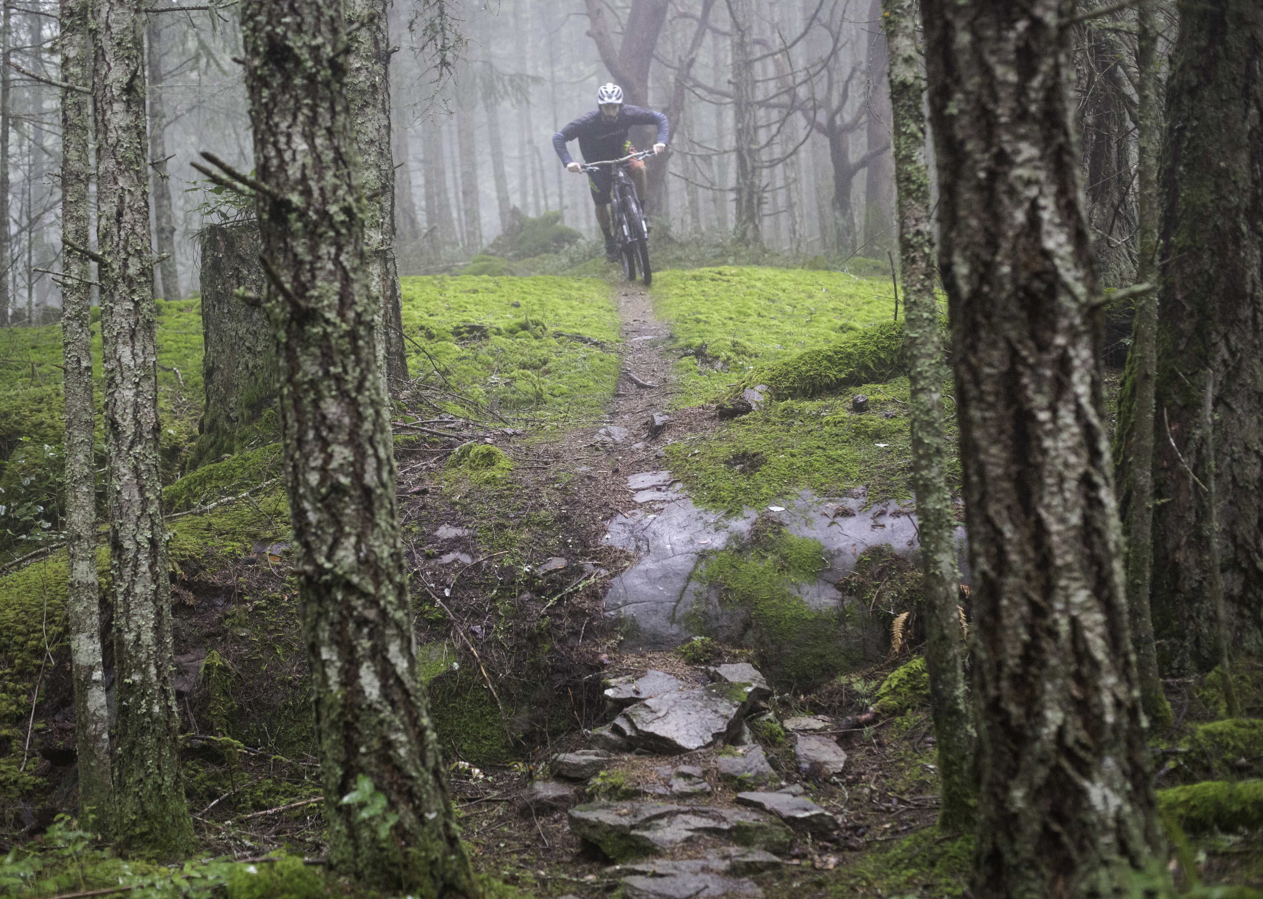 Dexter chasing single track in the mist.