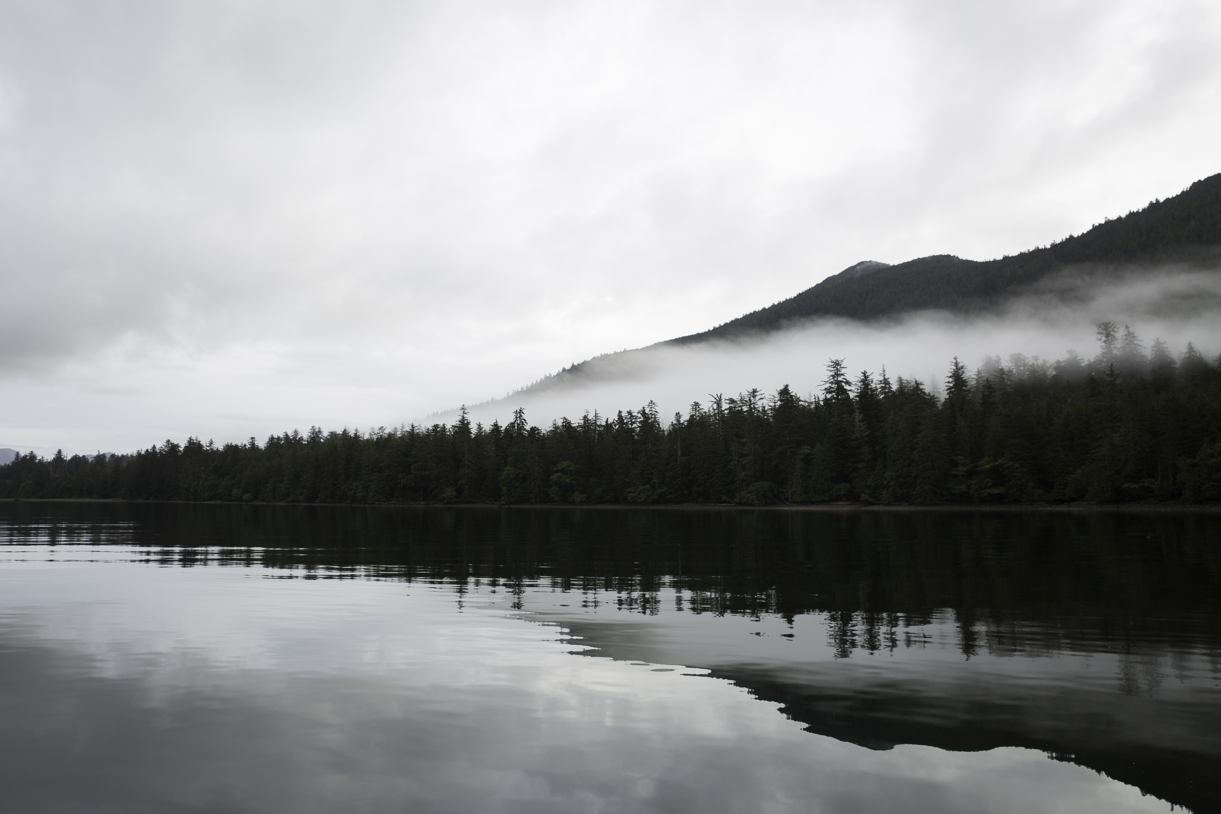 Stillness. Sitka spruce and low cloud.