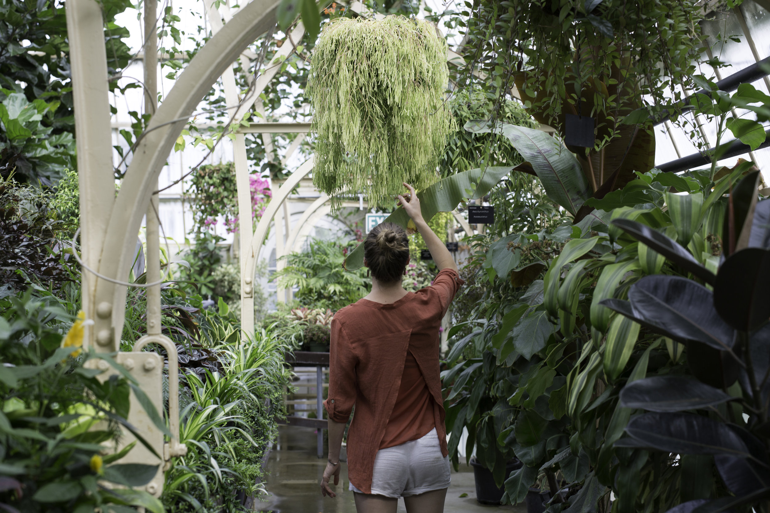 The botanical gardens in Christchurch were any greenhouse loving kids dream come true.