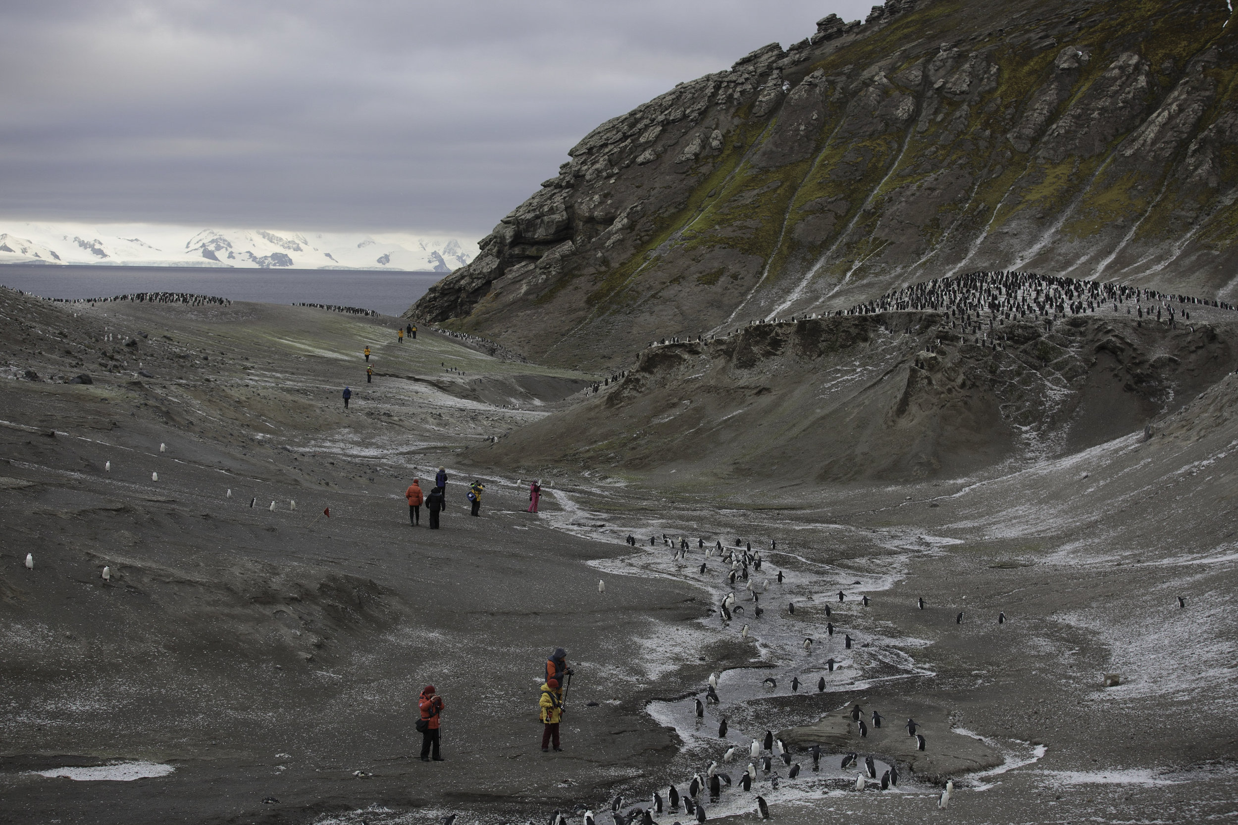 Note, all the white is penguin feathers, not snow. Bailey Head, Deception Island.