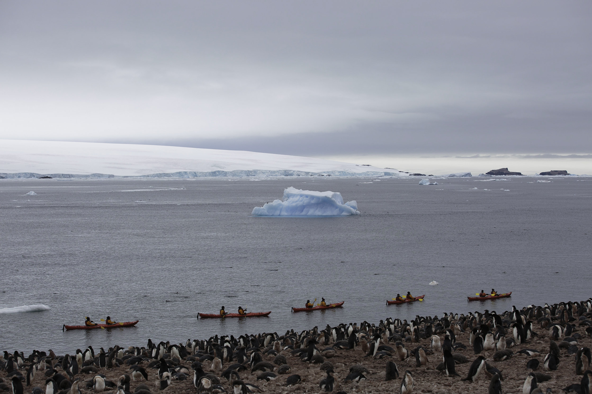 A group of kayakers from the kayak program aboard take in the colony of Adelie Penguins at Paulet Island.