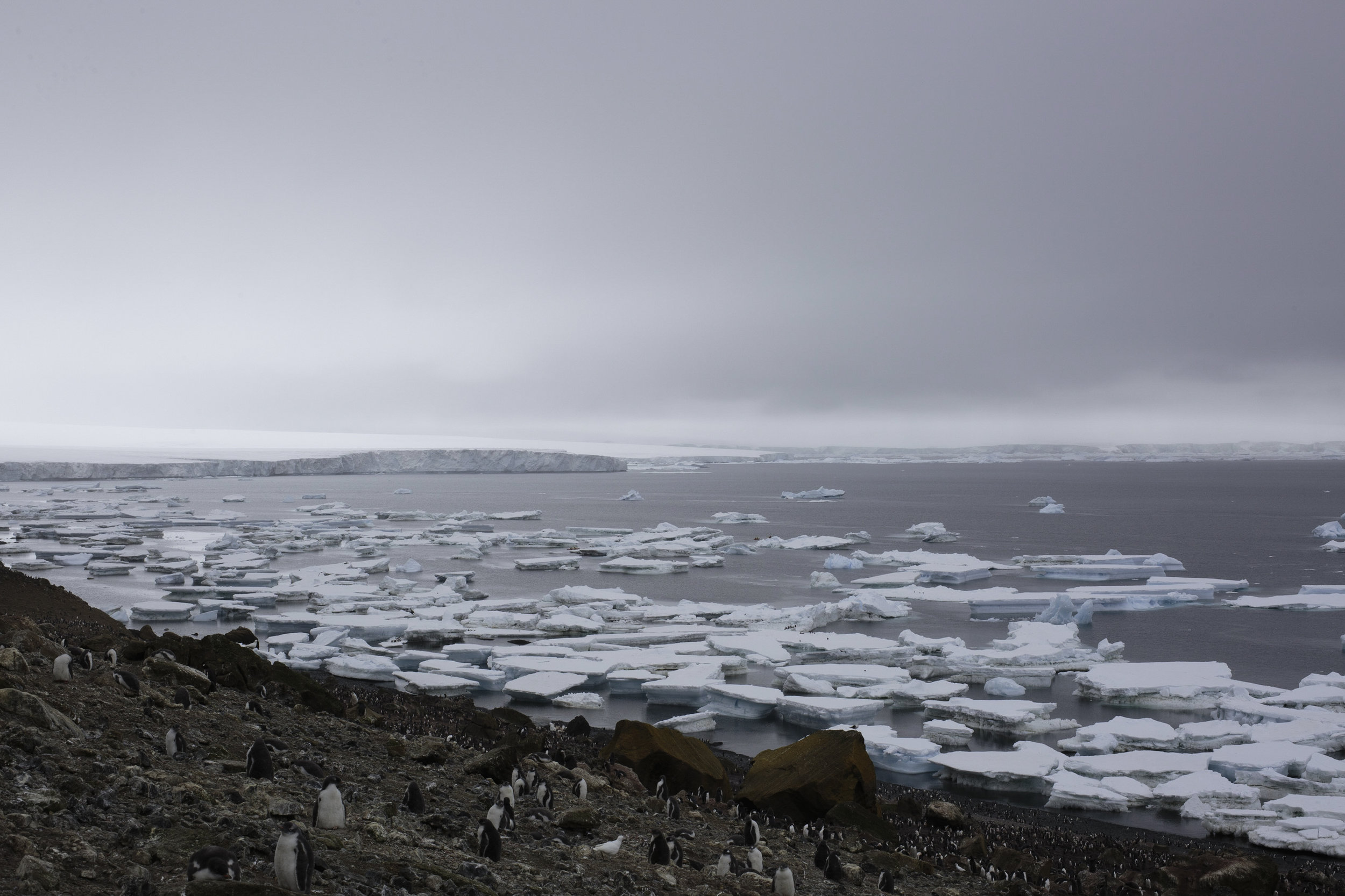 Large chunks of sea ice grounded at low tide.