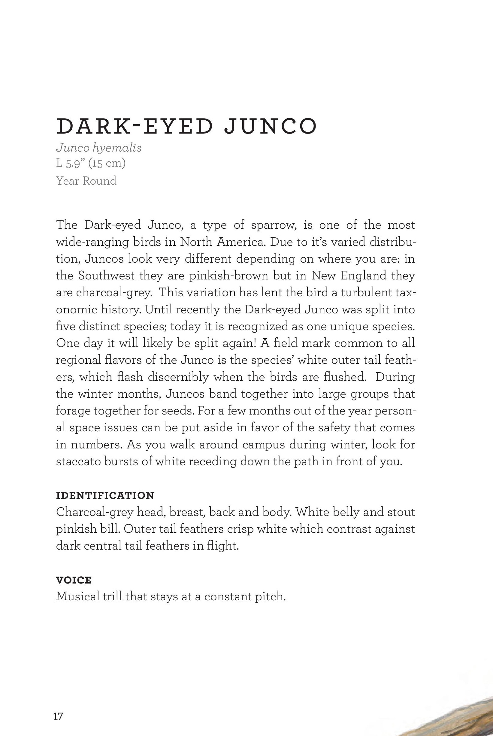 James_FieldGuide_Text screen lores (3)-page-020.jpg