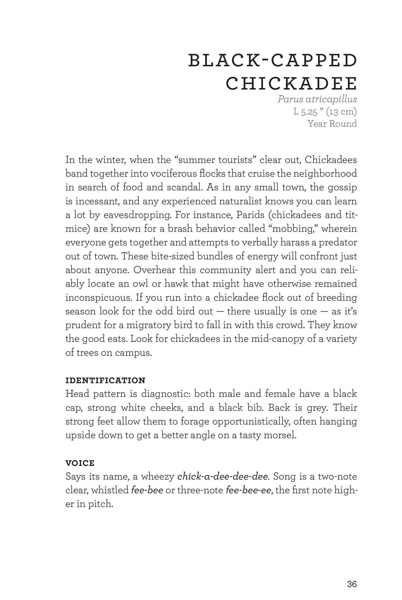 James_FieldGuide_Text screen lores (3)-page-039.jpg