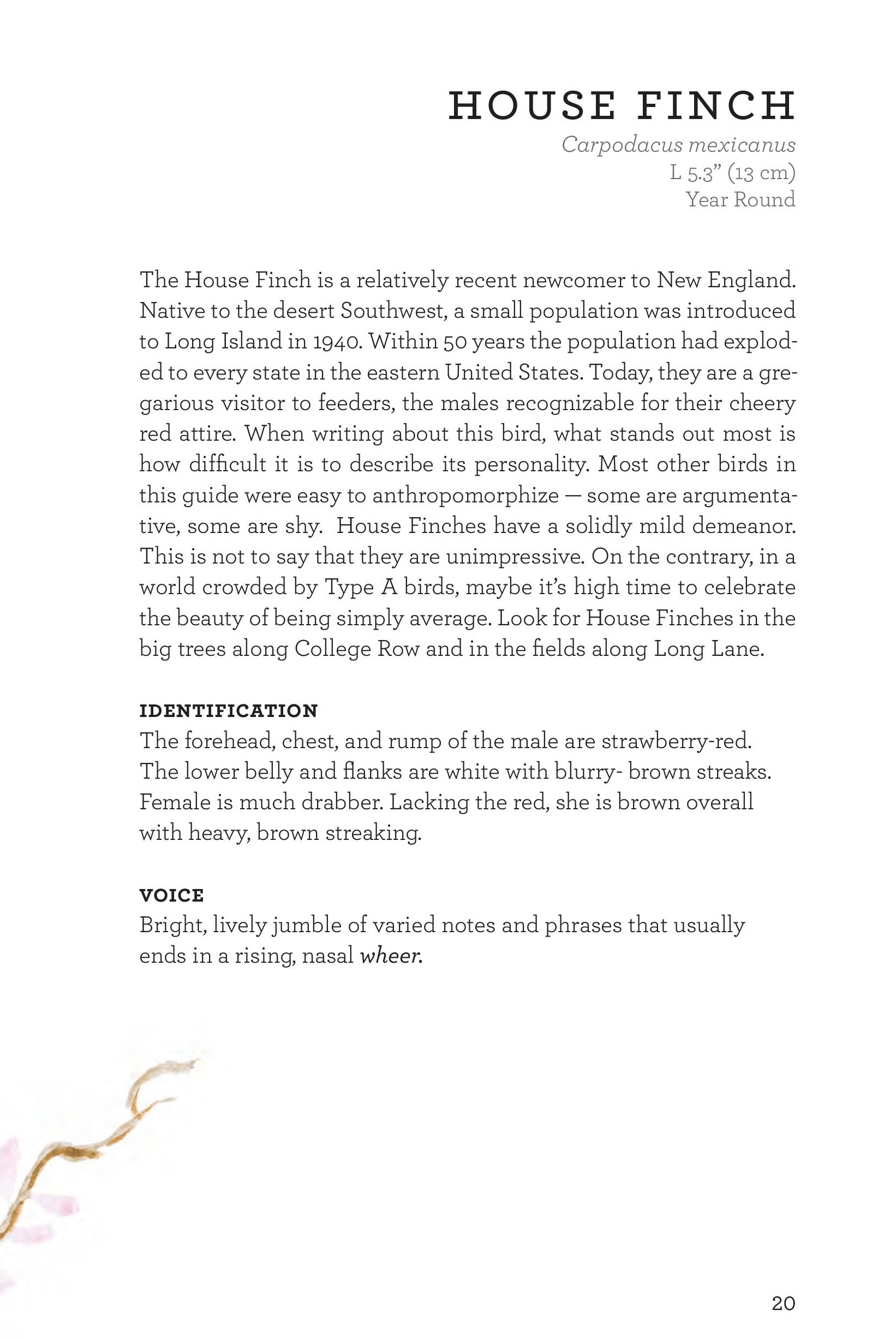 James_FieldGuide_Text screen lores (3)-page-023.jpg