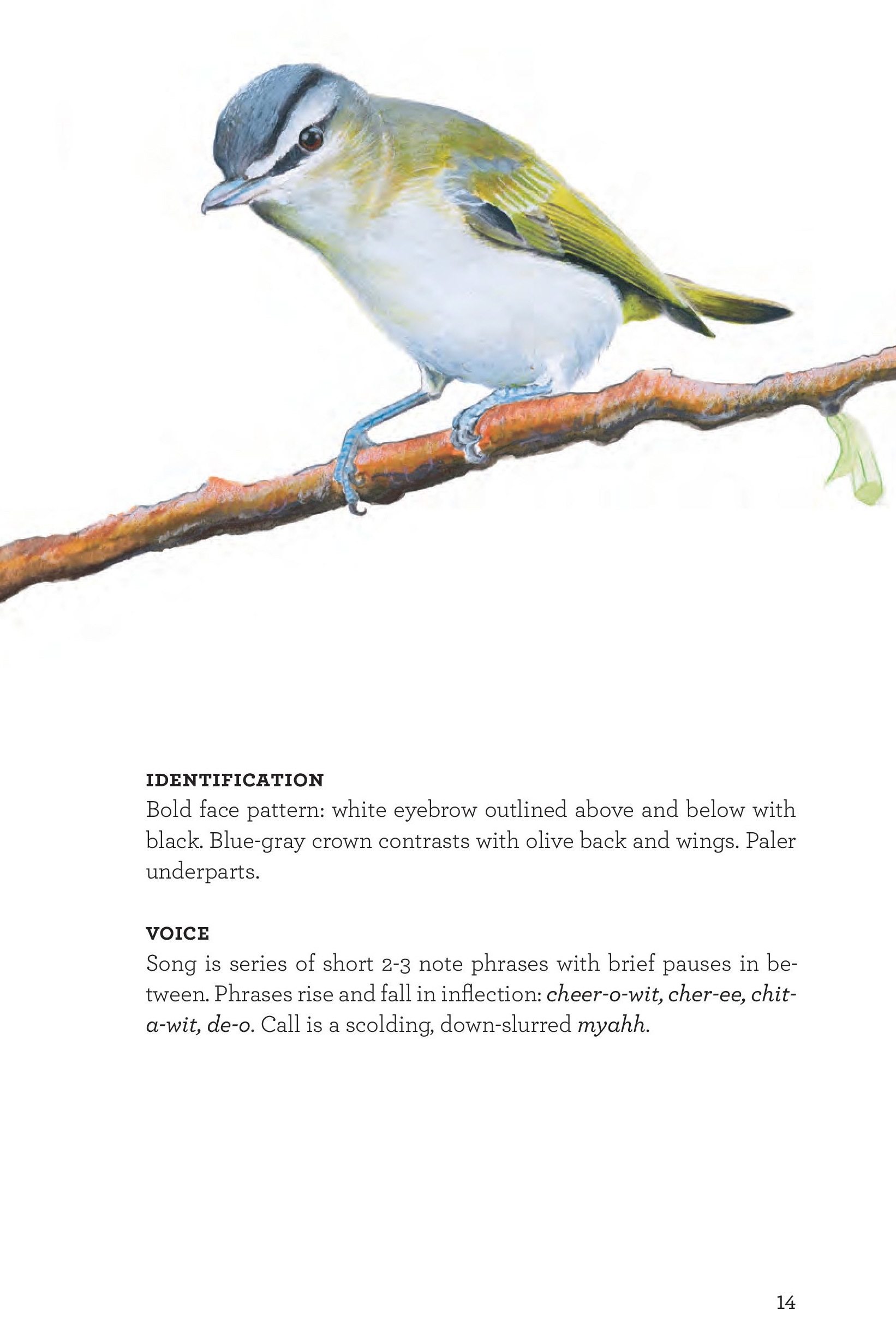 James_FieldGuide_Text screen lores (3)-page-017.jpg