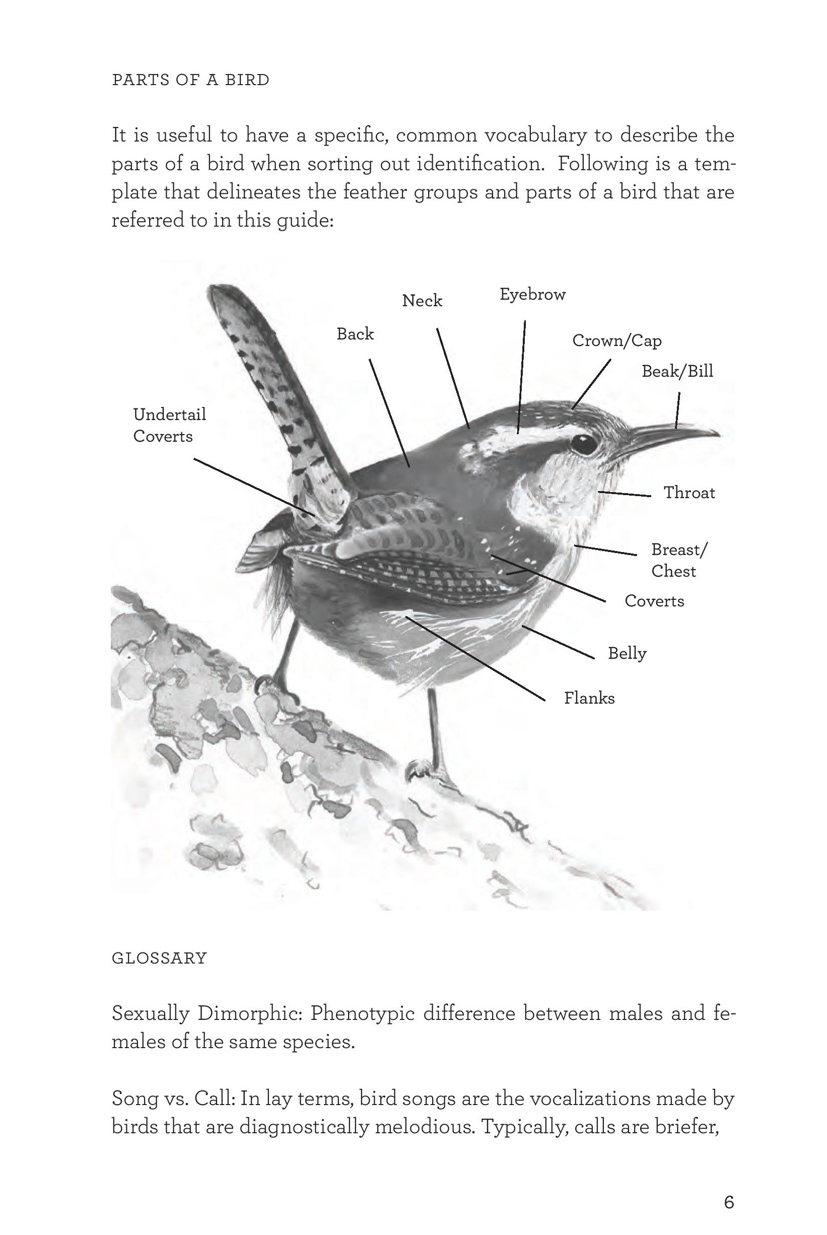 James_FieldGuide_Text screen lores (3)-page-009.jpg