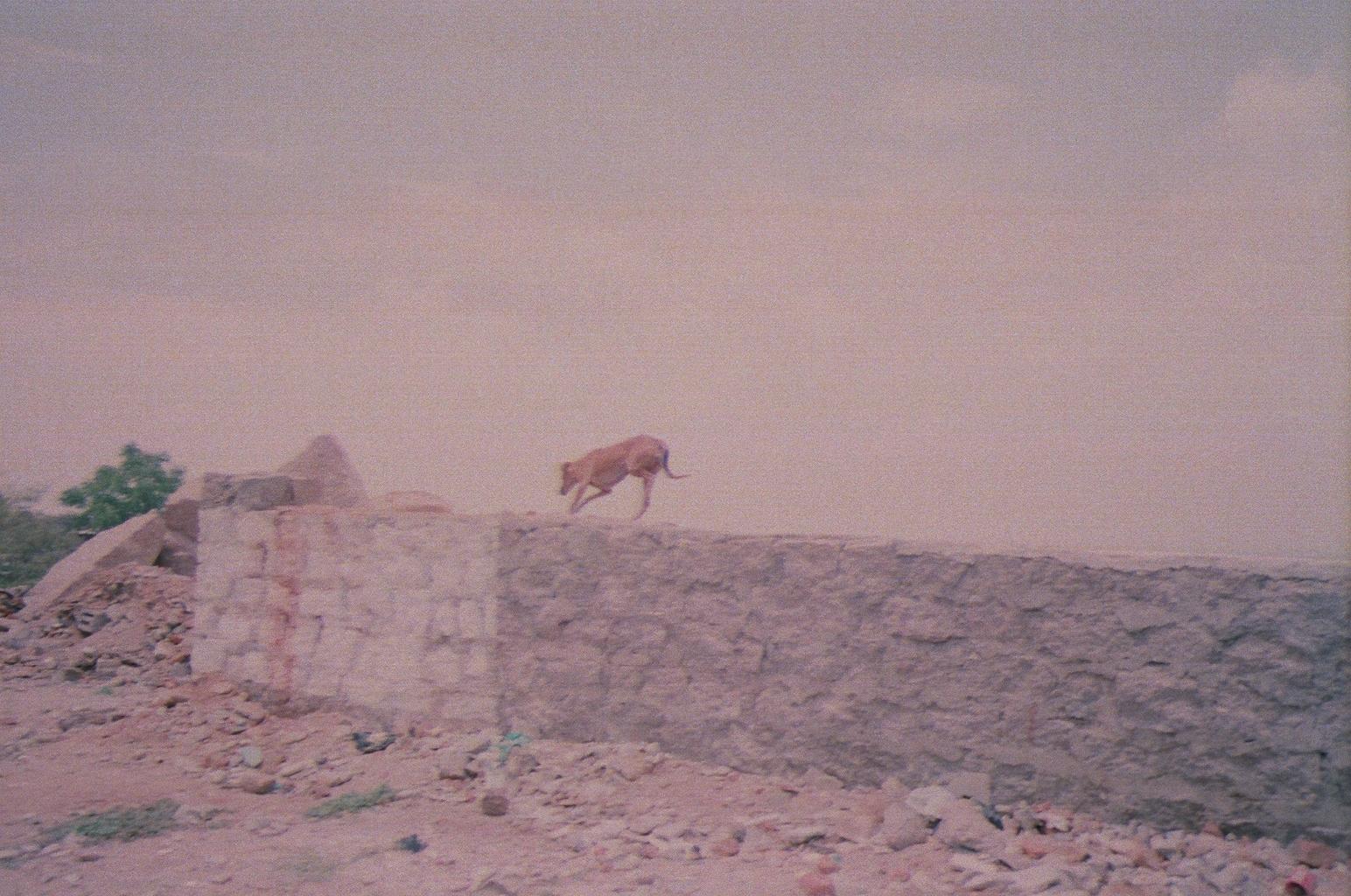 Scared Dog / Hyderabad, India