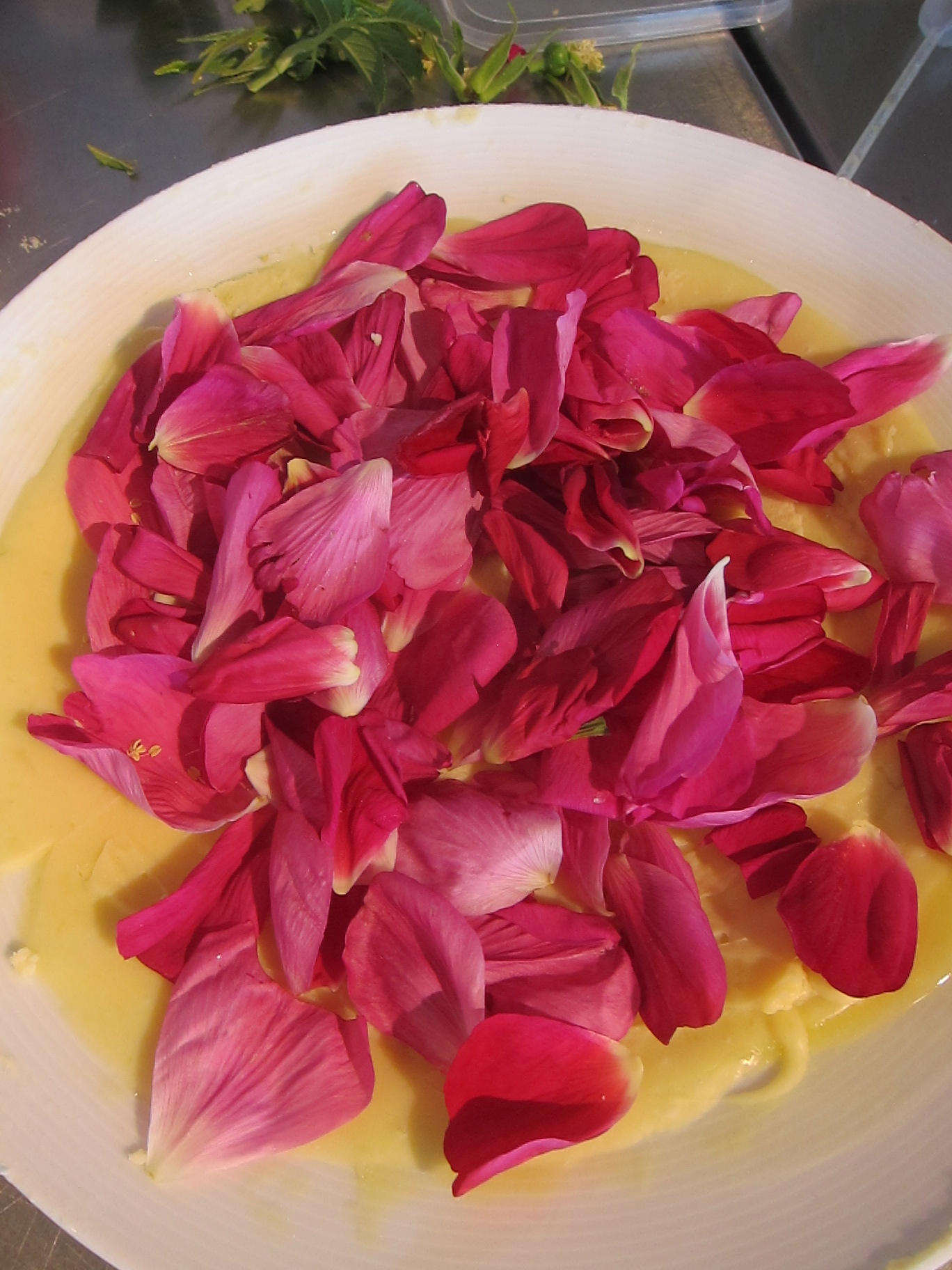 Beach rose enfleurage: Solid, odorless fat used to capture the floral fragrance.