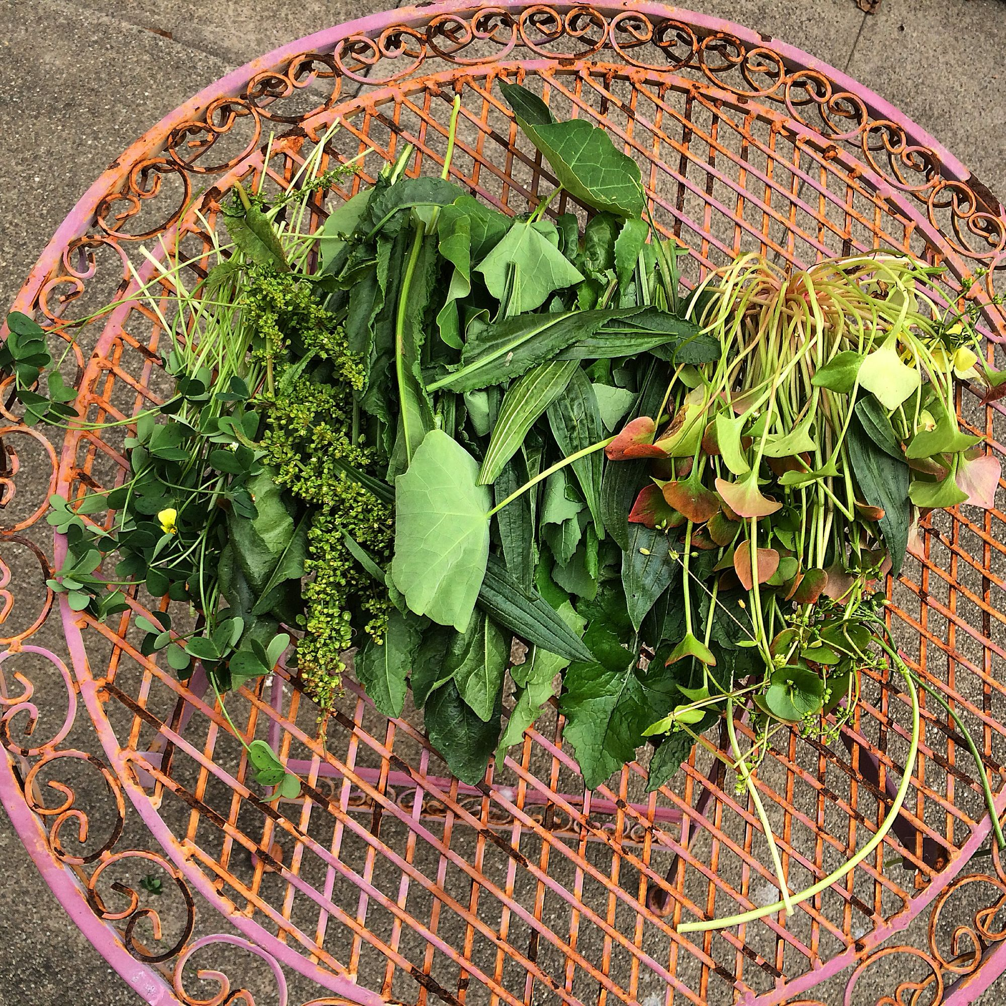 Dock leaves and seeds in an array of other wild edible plants - can you find the it?