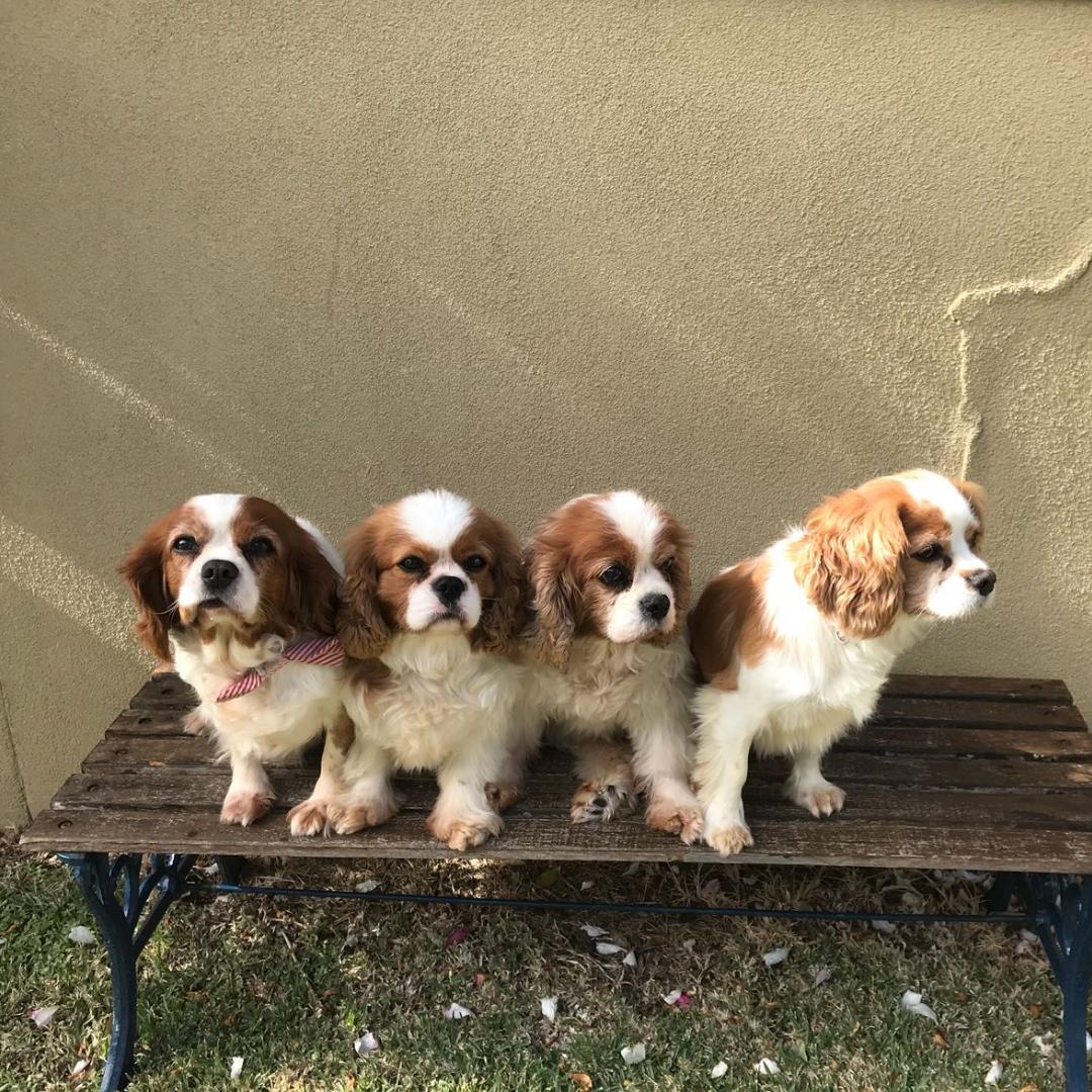 Duchess, Duke, Oscar & Belle (thanks Lauren for the photo)