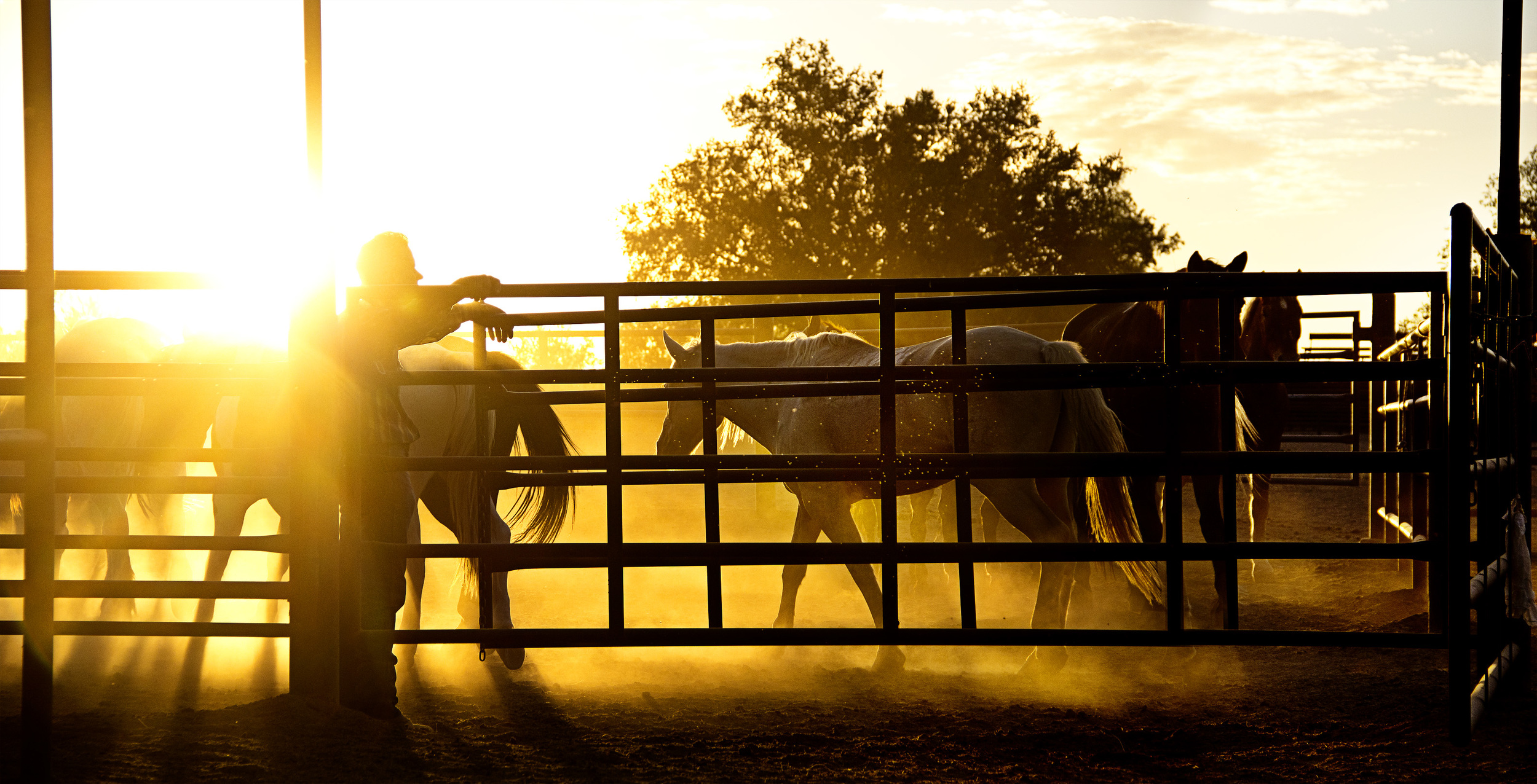 White Stallion Ranch | Tucson, AZ