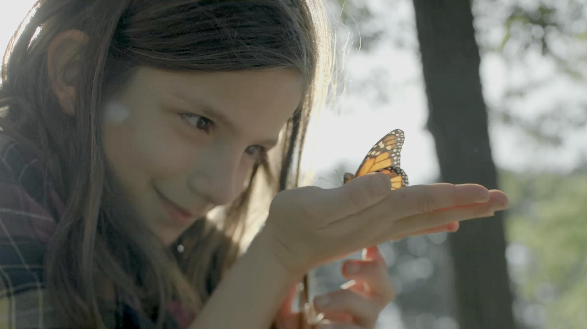 screengrab_butterflies.png