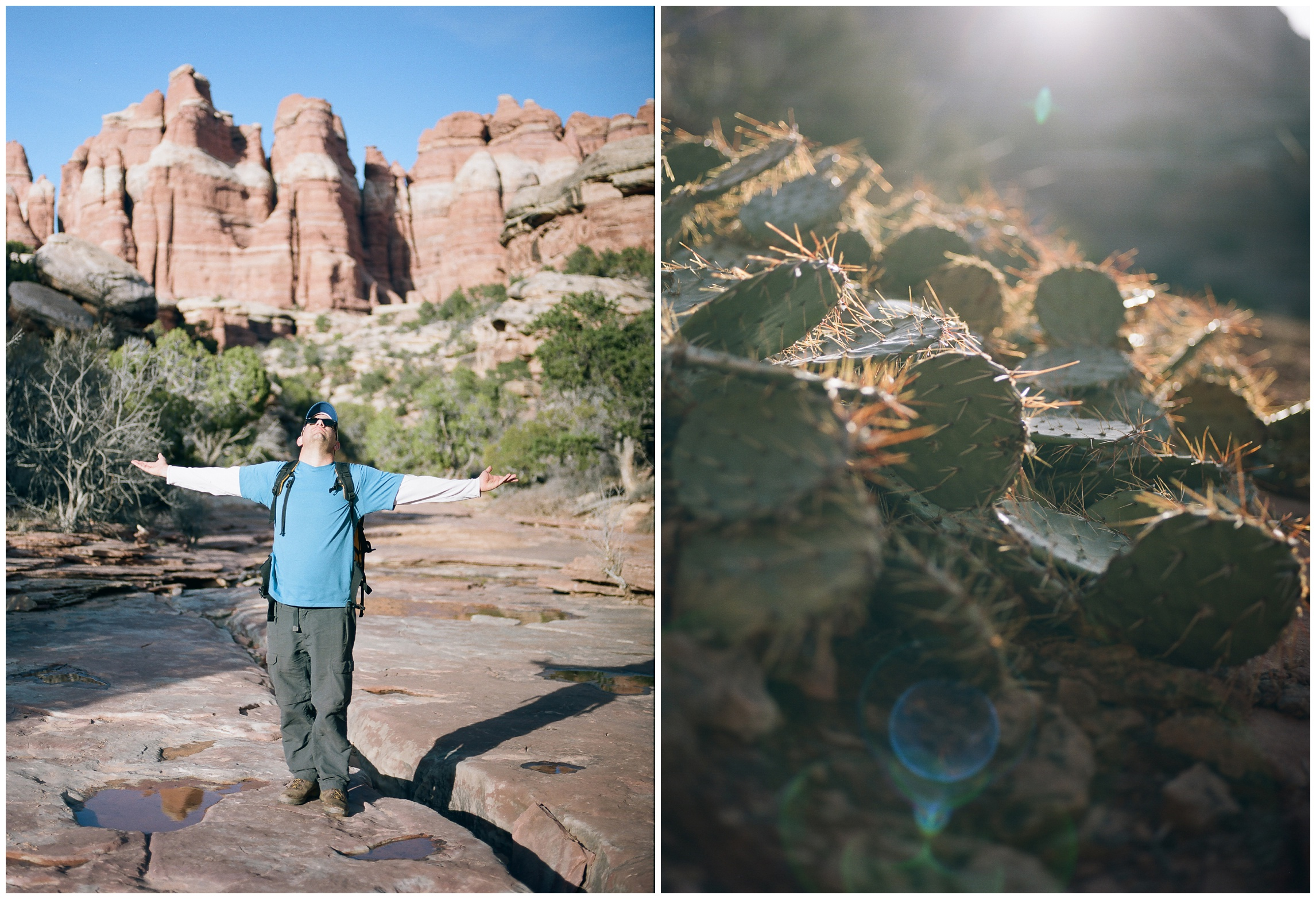 There was a lot of this.  Max enjoying the amazing views in Elephant Canyon, Canyonlands National Park. A cactus in the cool dusk light. Film photography by Sonja Salzburg of Sonja K Photography.