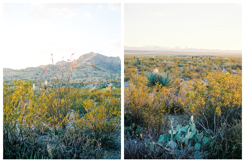 The desert in Big Bend National Park. Landscape and travel photography by Sonja Salzburg of Sonja K Photography.