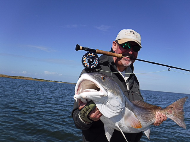 A large bull redfish caught on fly in the marshes outside of Port Sulfur, Louisiana.