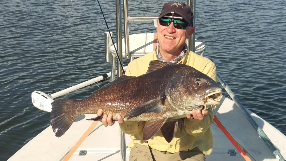 A very large bull black drum caught on fly in the Louisiana marshes outside of Port Sulphur.