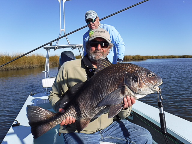 A large black drum caught on fly in the Louisiana marsh.
