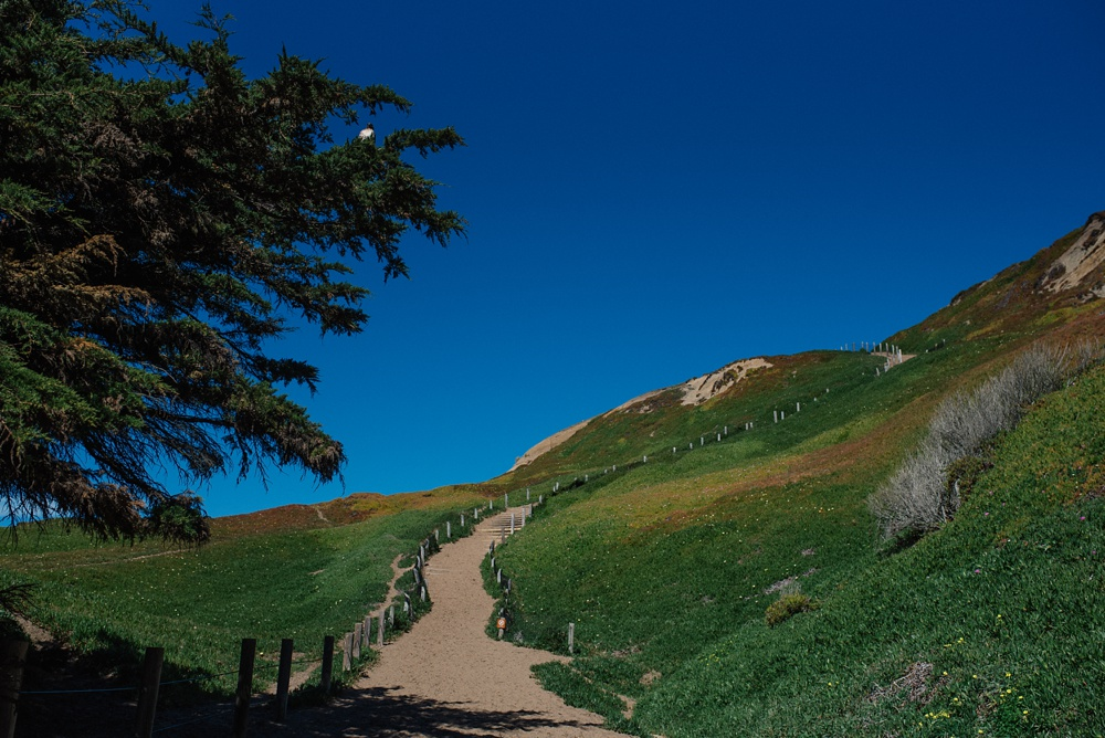 The trail down to the beach at Fort Funston outside of San Francisco, California. Travel destination photography by Sonja Salzburg of Sonja K Photography.