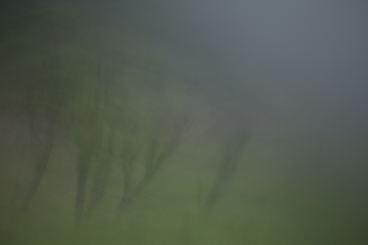Trees and fog, 2013