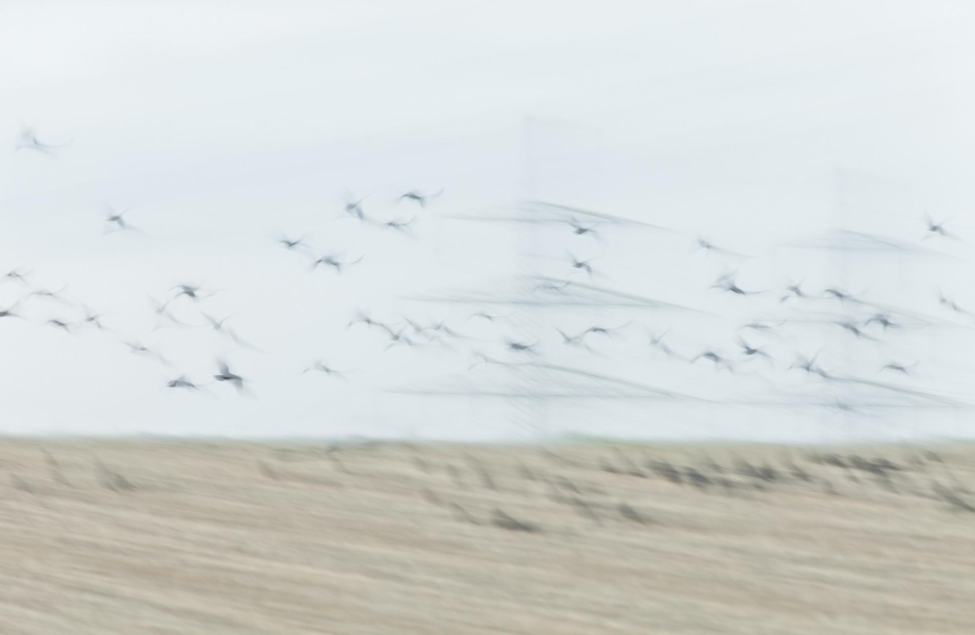 Birds, 2012