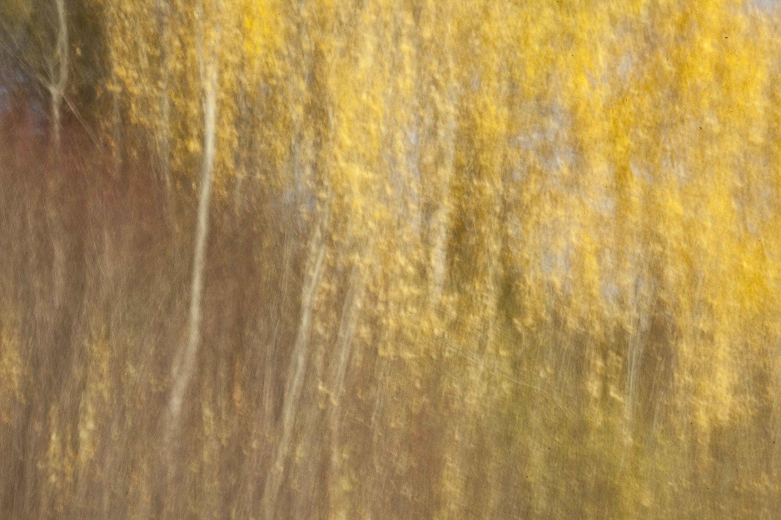 Golden leafs, 2012