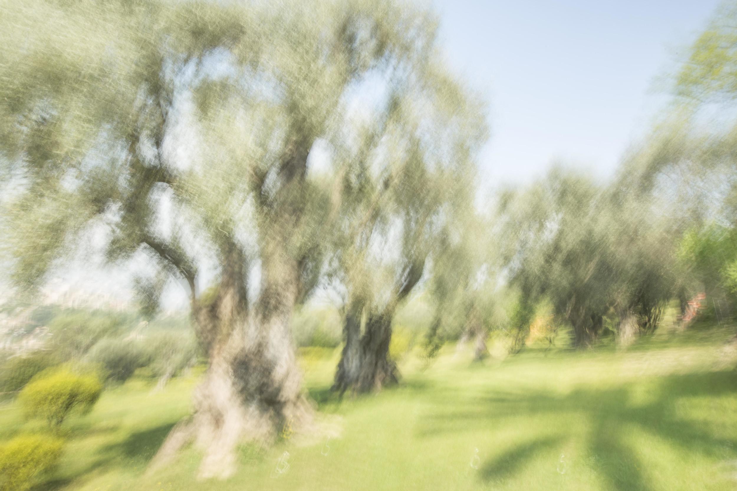 Renoir's Garden #1, 2013
