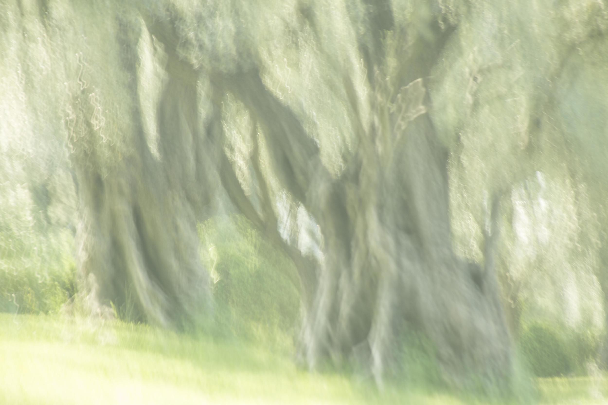 Renoir's Garden #6, 2013
