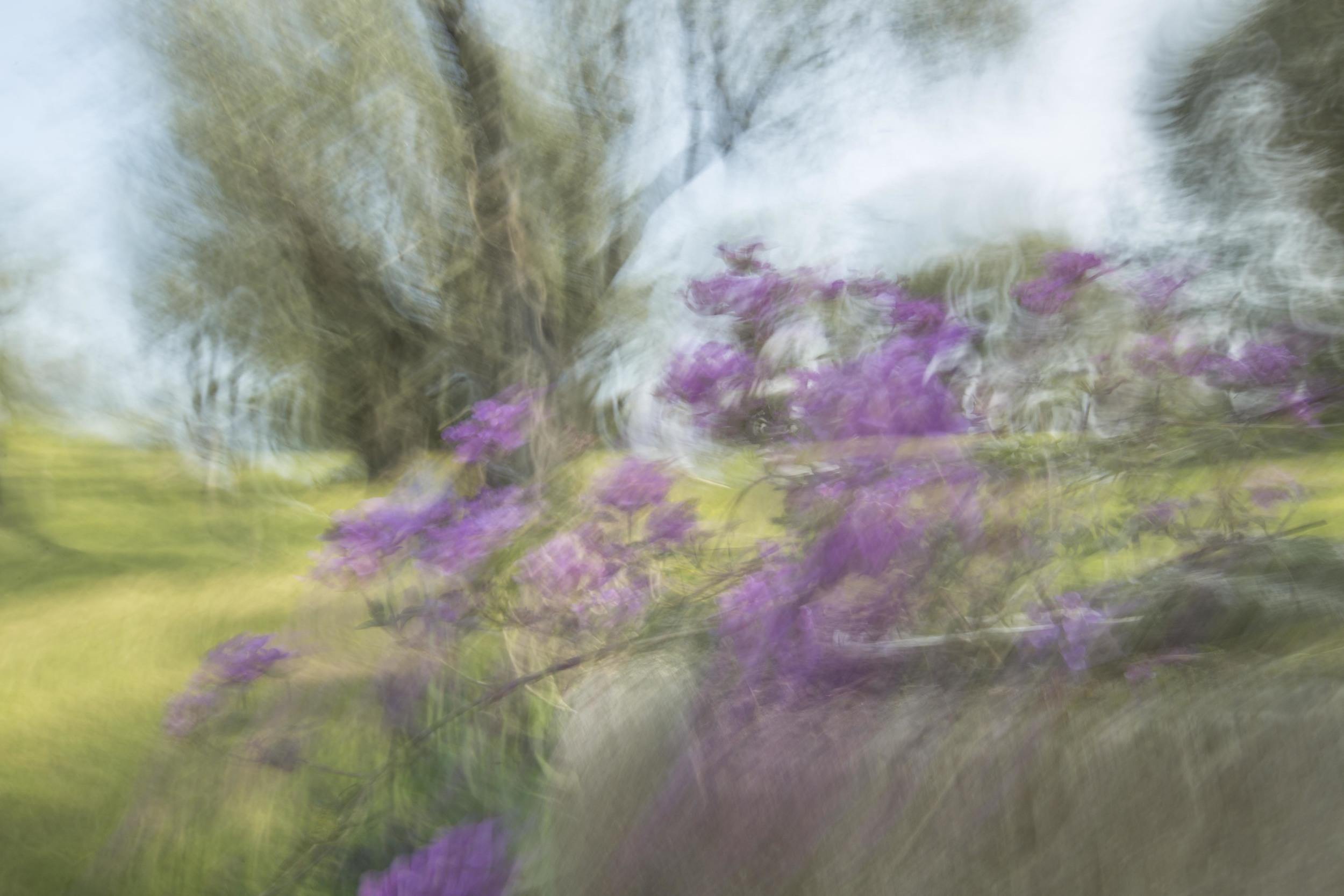 Renoir's Garden #7, 2013