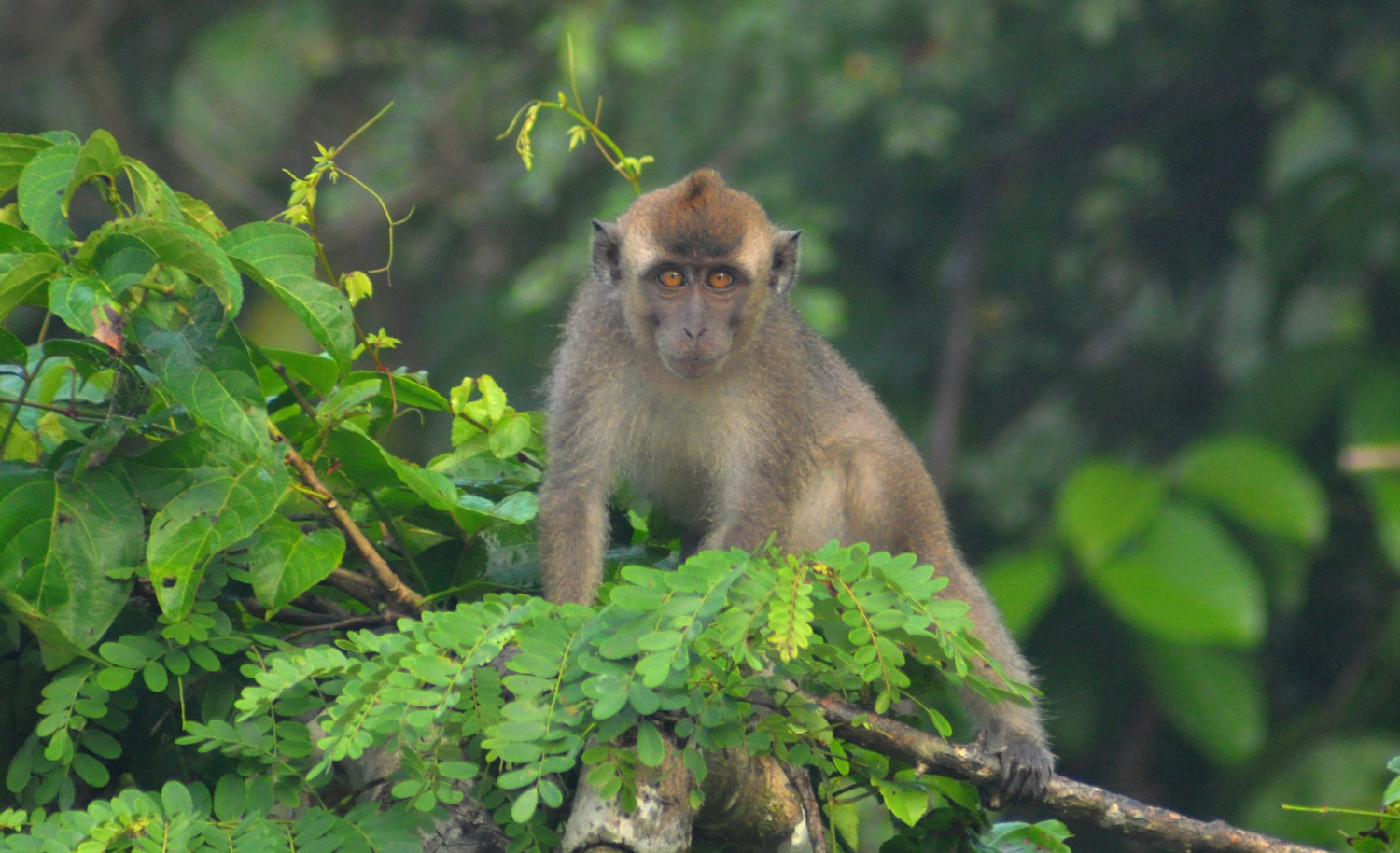 Animals_Monkey_1_web.jpg