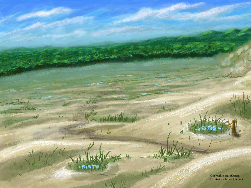 Spindlewort growing in intermittent saltwater pools, in the southern desert. View faces south towards the salt marshes. Digital sketch, 2015.
