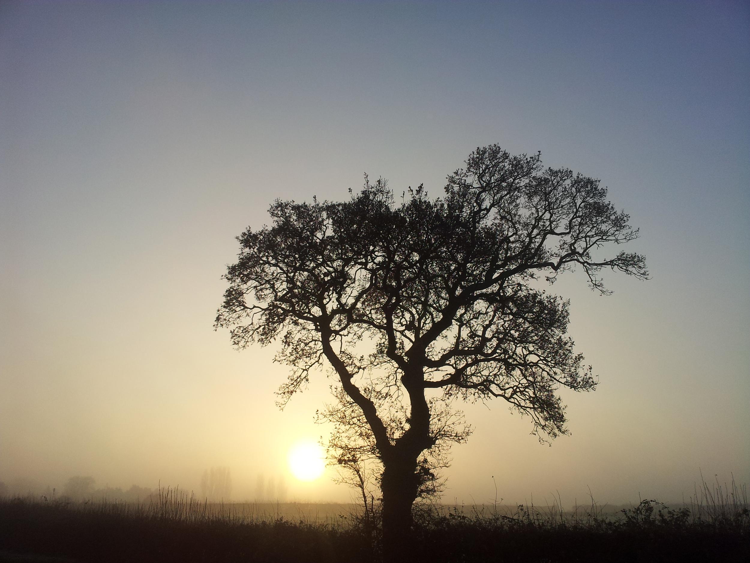 Tree silhouette on a foggy sunrise pastel colours 01.jpg