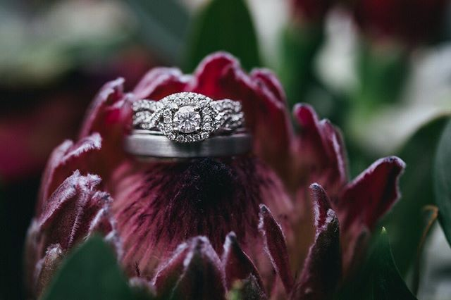 Because ring shots give me life 🤩 . . . . .  #luxamorephotography #chattanoogawedding #chattanoogaweddingphotographer #chattanoogaweddingphotography #chattanoogabride #chattanoogaphotographer #knoxvilleweddingphotographer #nashvilleweddingphotographer #knoxvilleweddingphotography #nashvilleweddingphotography #tennesseeweddingphotographer #fineartphotography #fineartphotographer #weddinginspiration #classicbeauty #southernbride #weddingday #weddingseason #weddinginspo #magicalweddingphotography #romanticweddingphotography #fineartweddings #chasinglight #destinationwedding #destinationweddingphotographer #weddingring #bouquet #macrophotography
