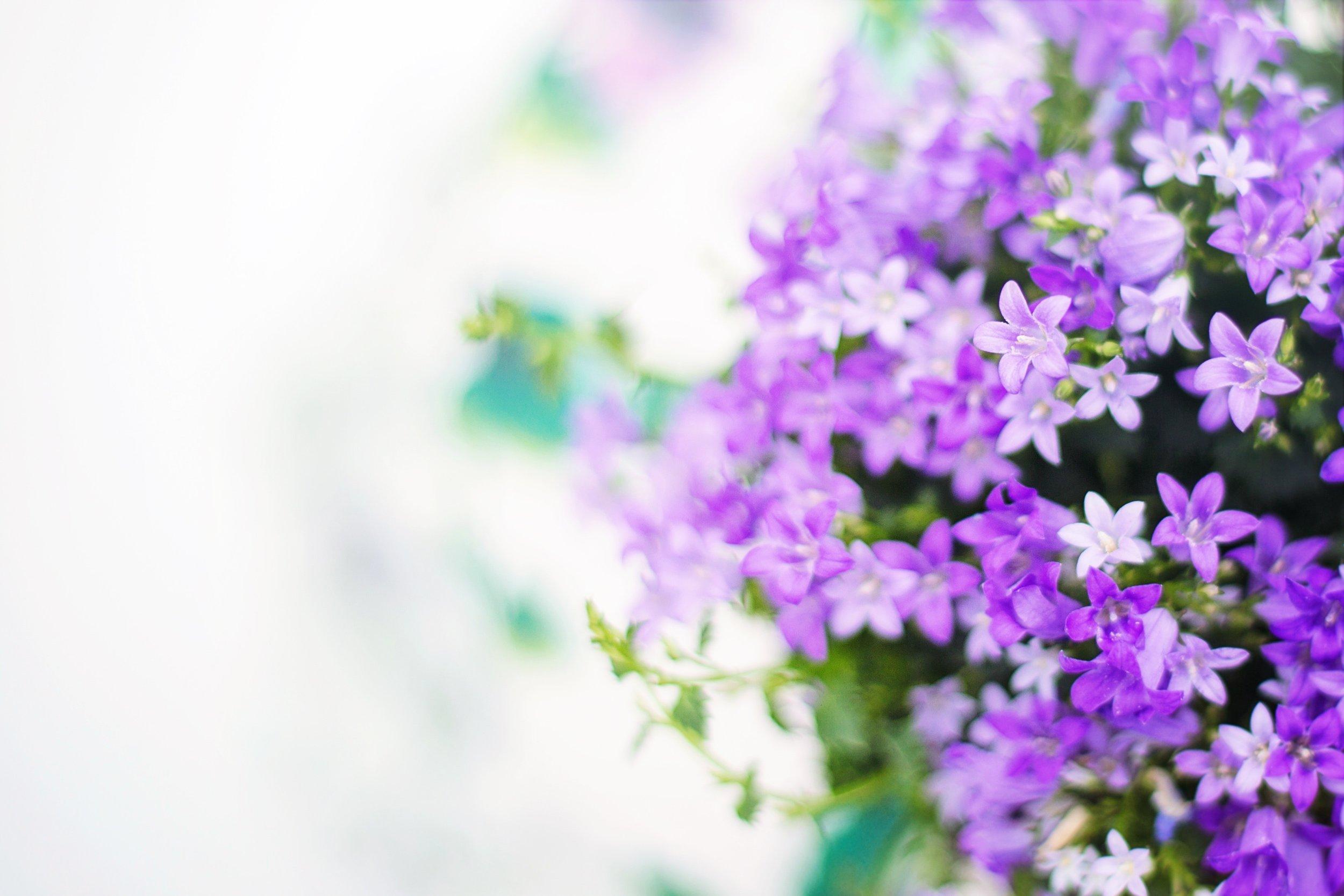 bloom-blooming-blossom-414661 flowers spring.jpg