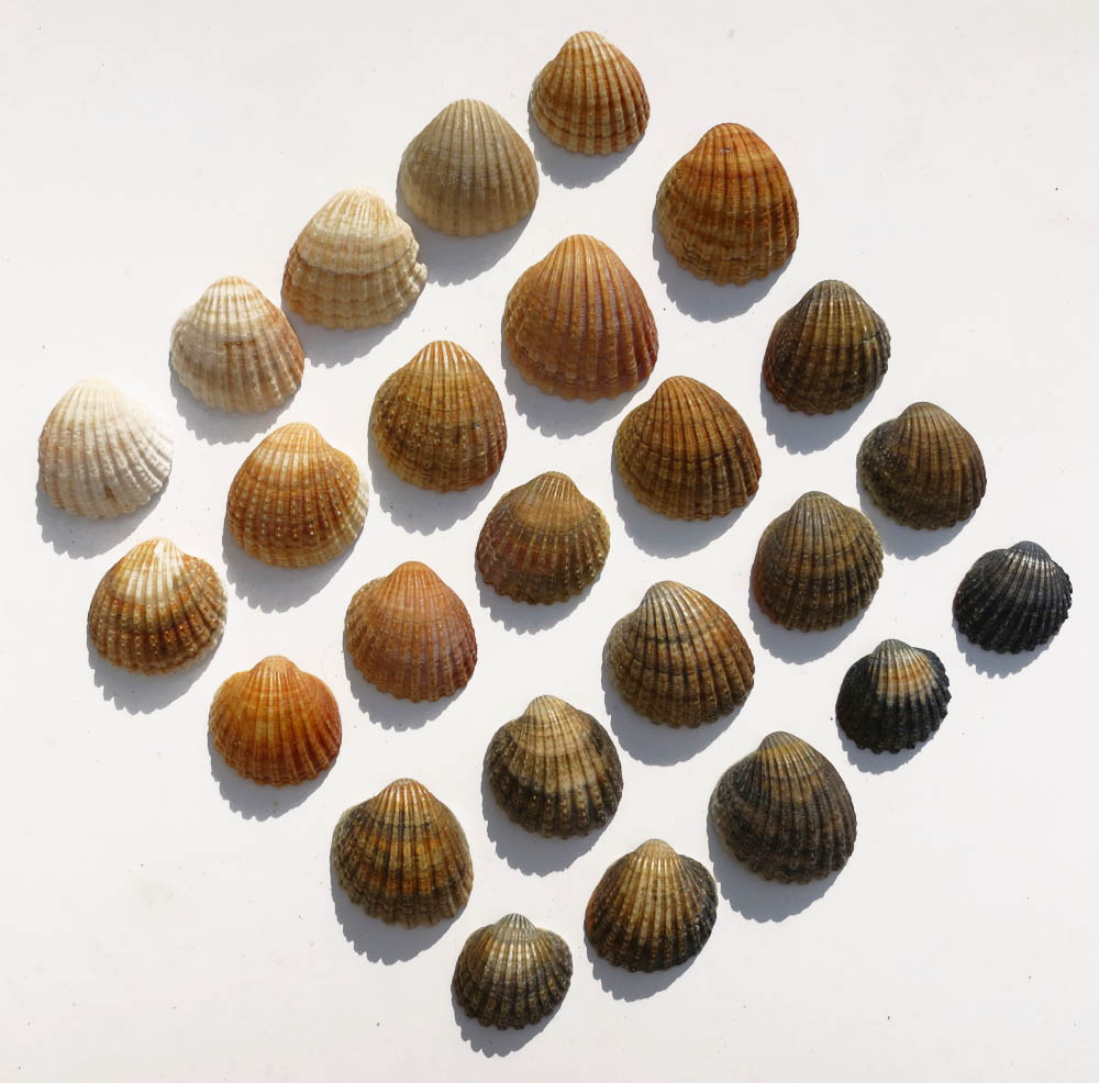 How long must it have taken to find so many seashells in different shades that weren't cracked?!? I have lived by the ocean for basically my entire life and let me tell you, that is no small feat. Great work  Tiniigi !