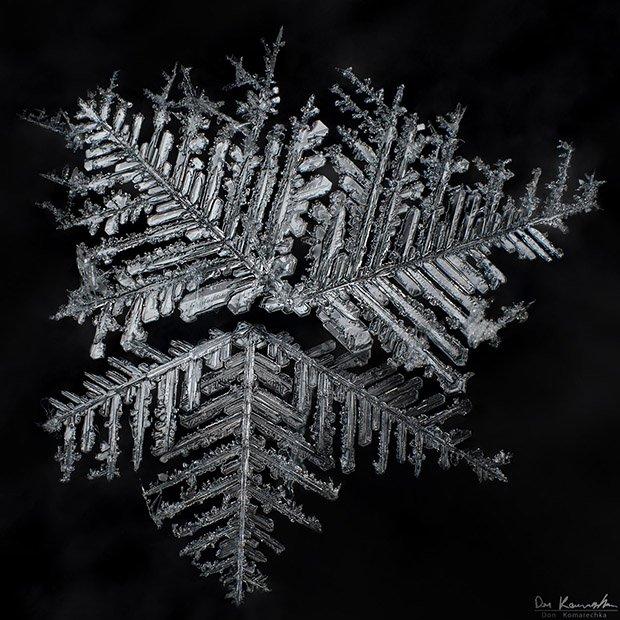extreme macro snowflake photos