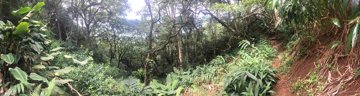 jungle hiking in hawaii
