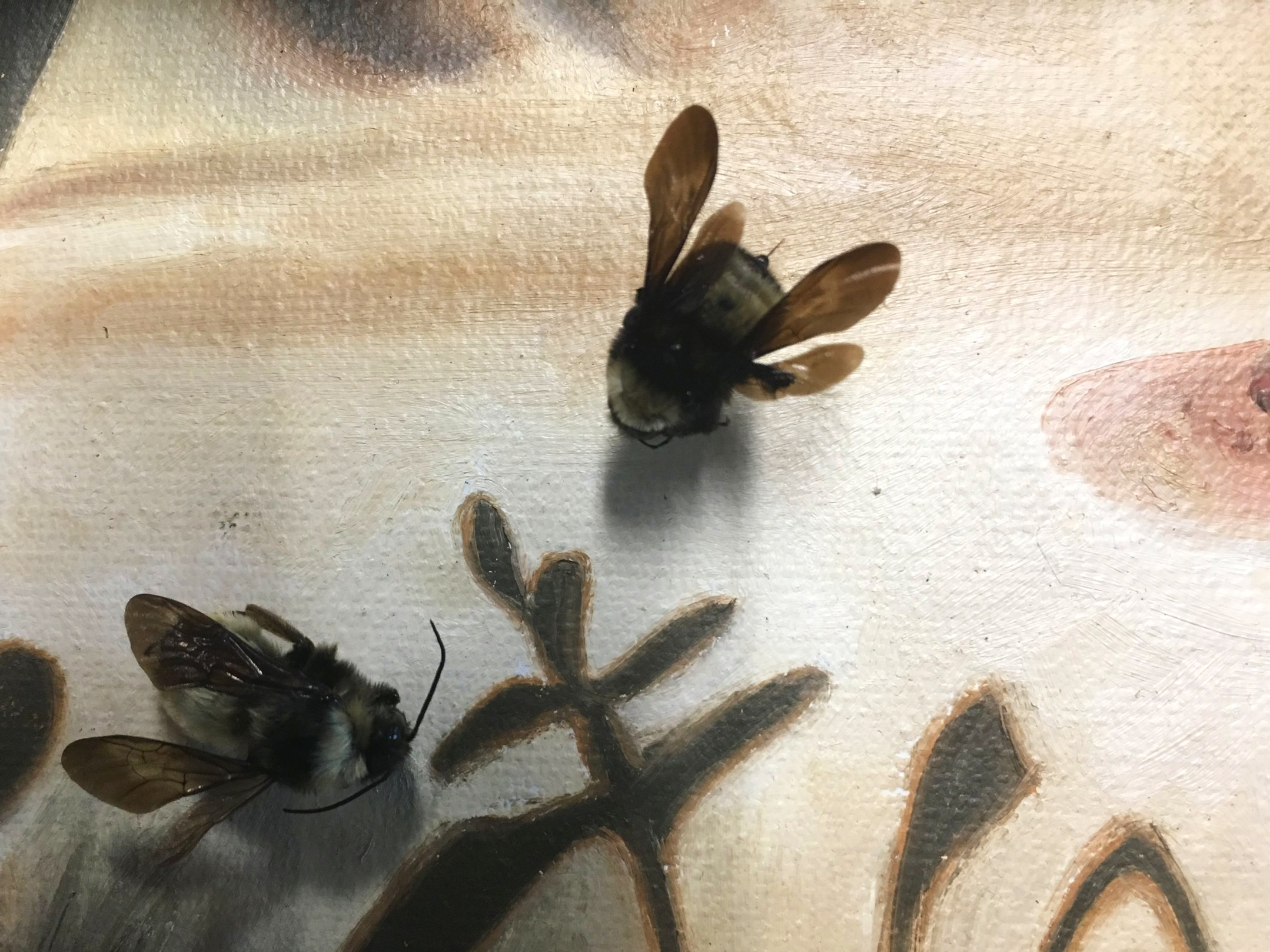 bees on a breast