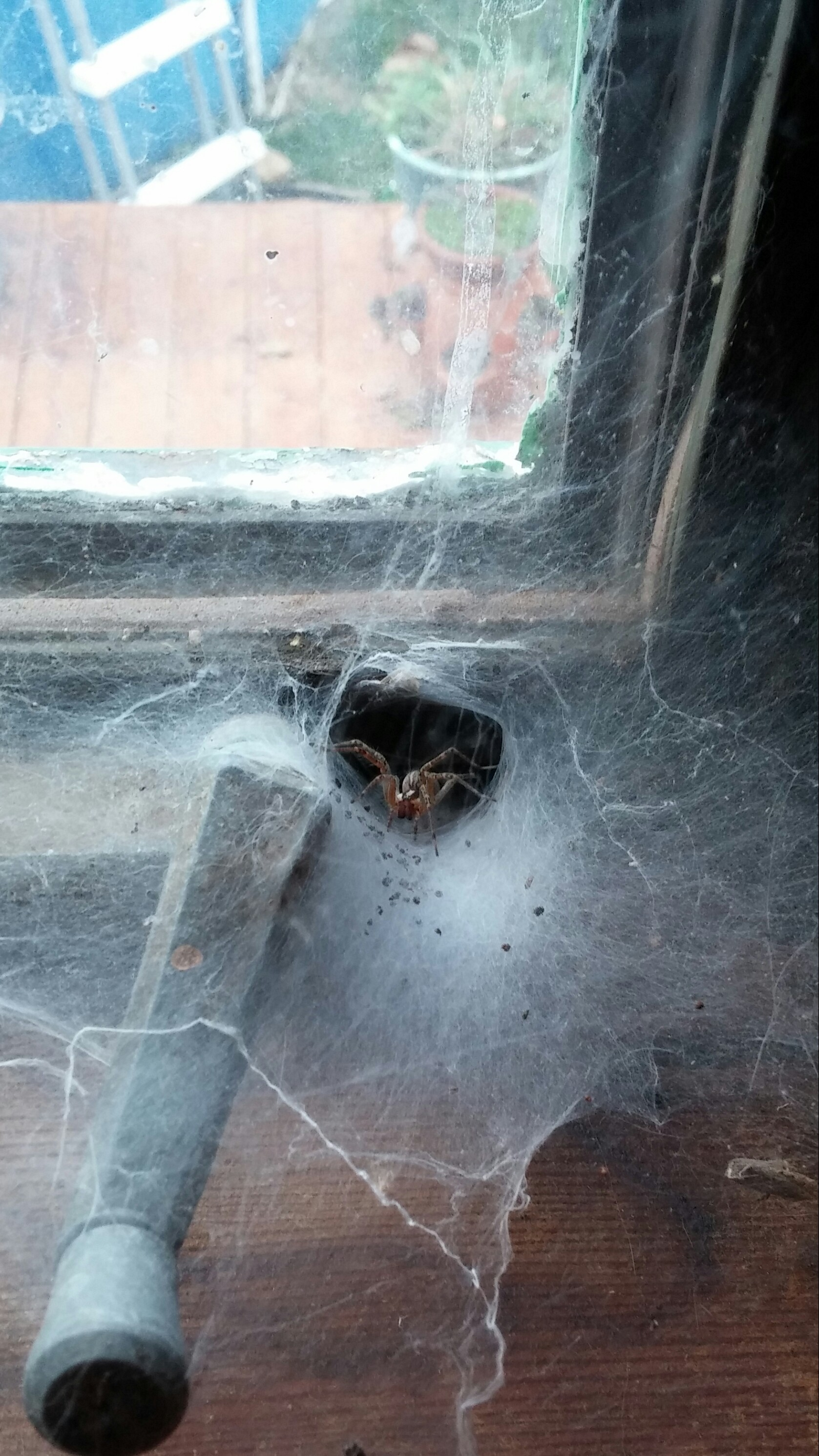 This spider lives in our house.