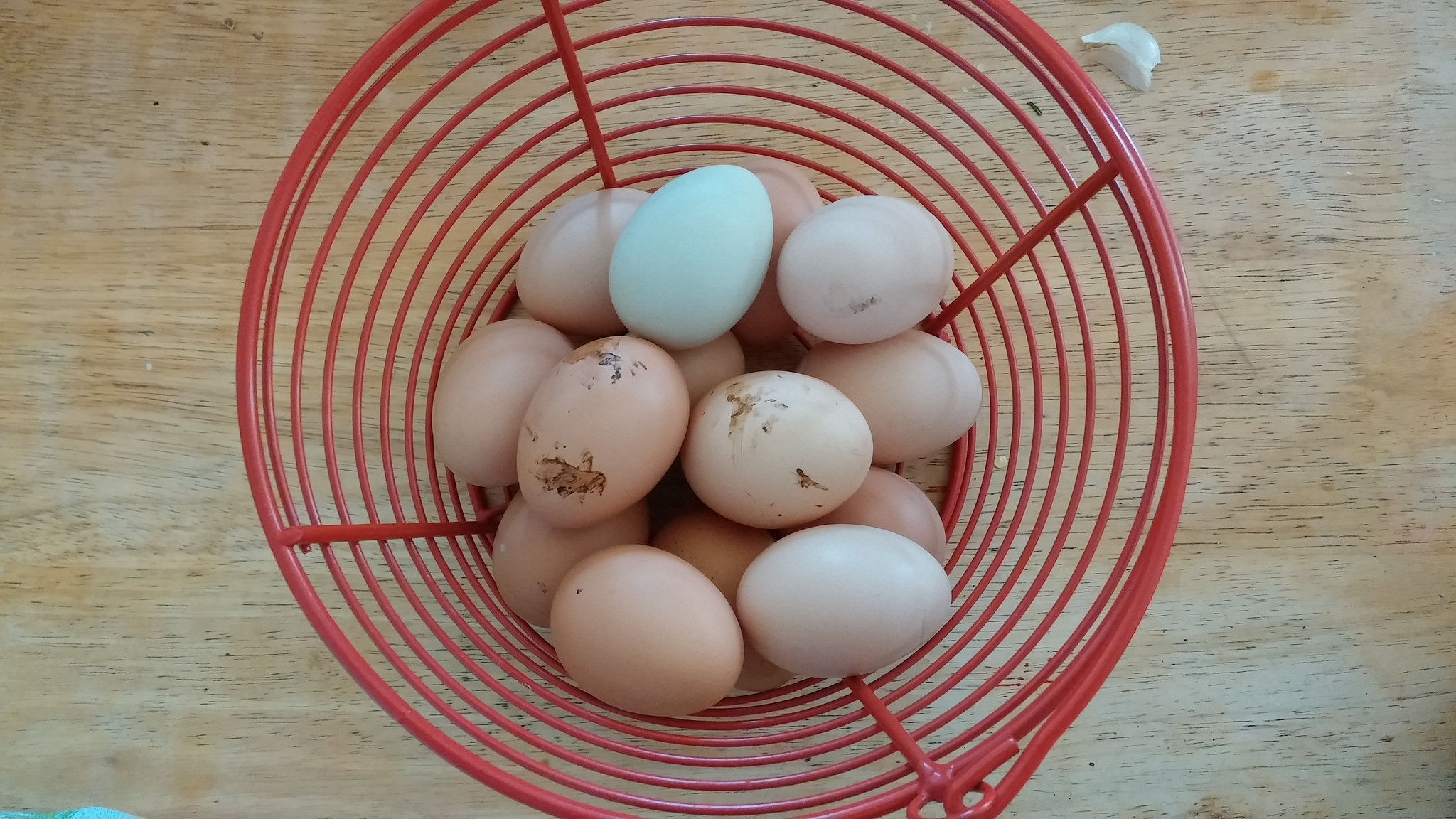 And their eggs are pretty, tasty and sugar-free.