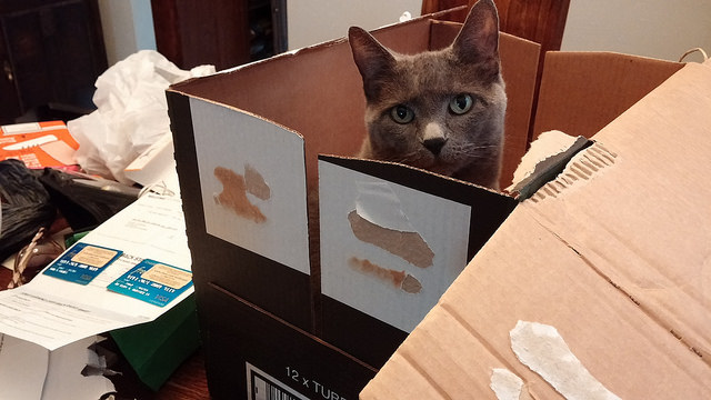 Cats love boxes more than poetry, but they take their boxes just as seriously.